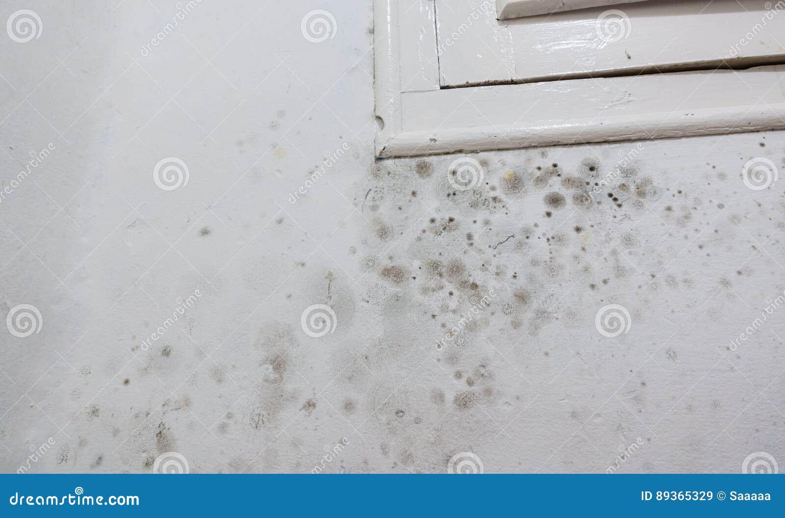 Feuchte Flecken Auf Einer Wand Stockbild Bild Von Feuchtigkeit