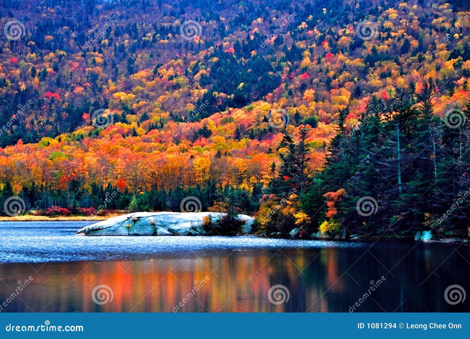 Feuillage d automne de la Nouvelle Angleterre
