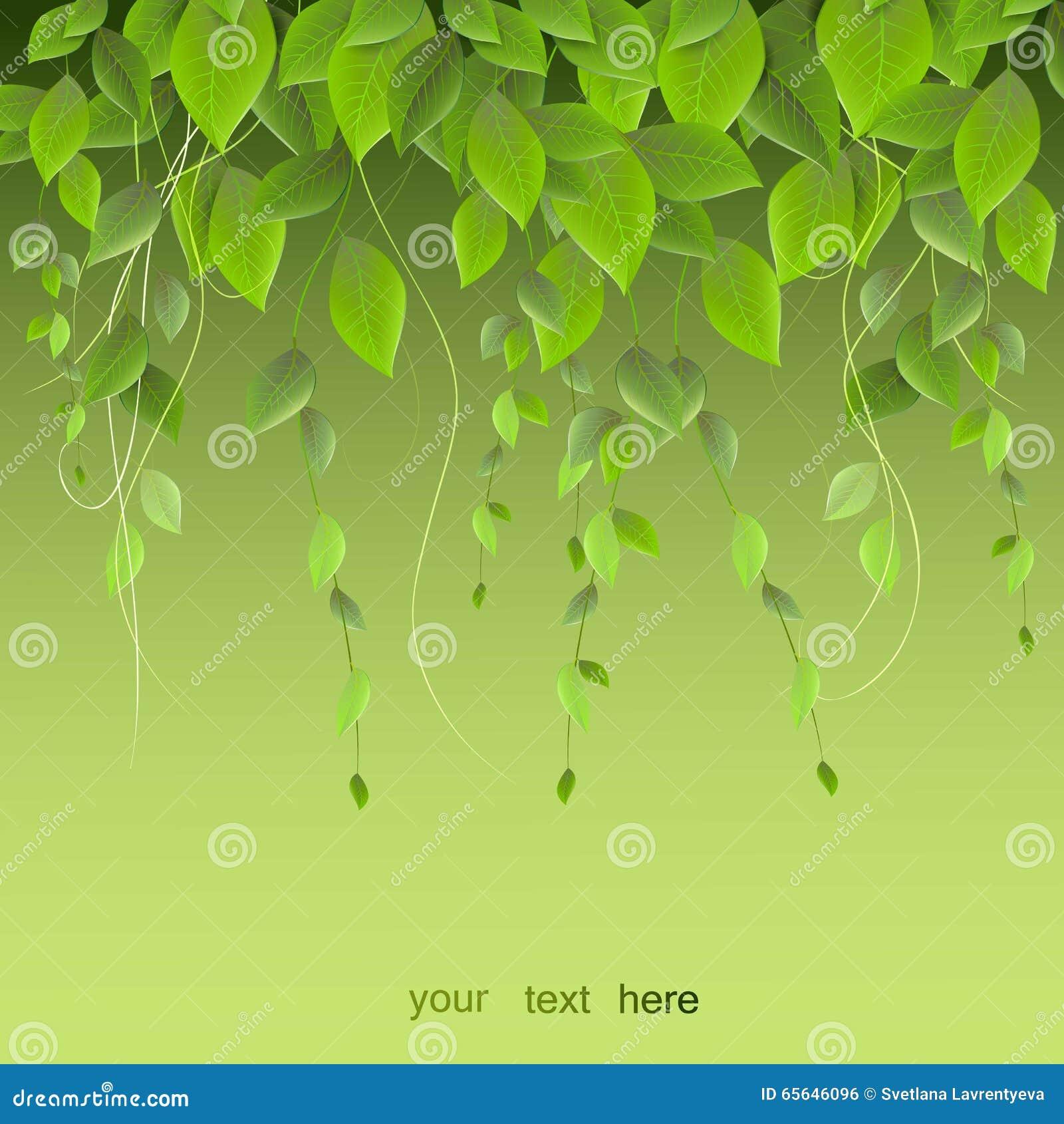 Feuillage dense accrochant sur un fond vert, usines s élevantes, VE