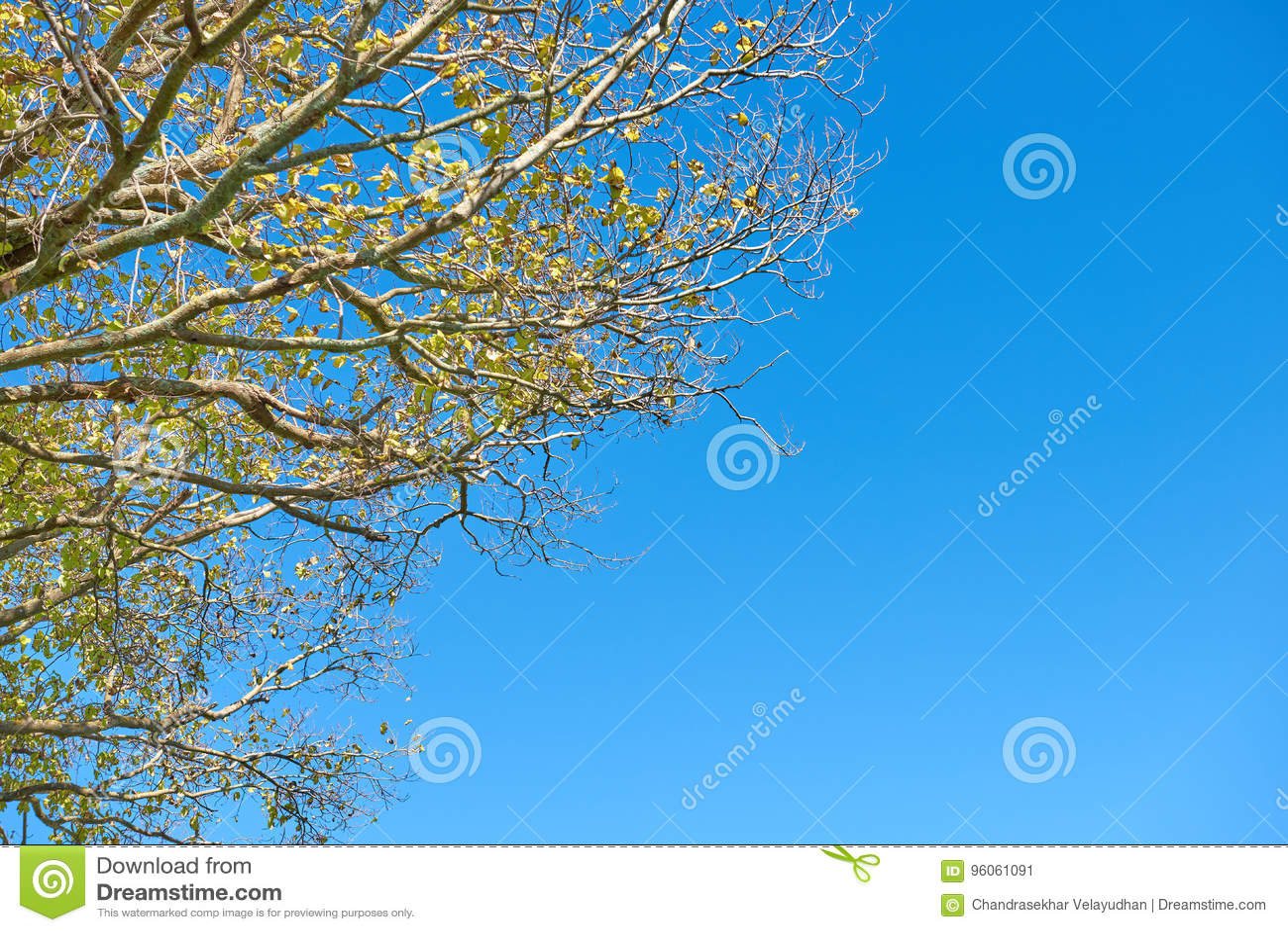 Feuillage des arbres contre un ciel bleu lumineux