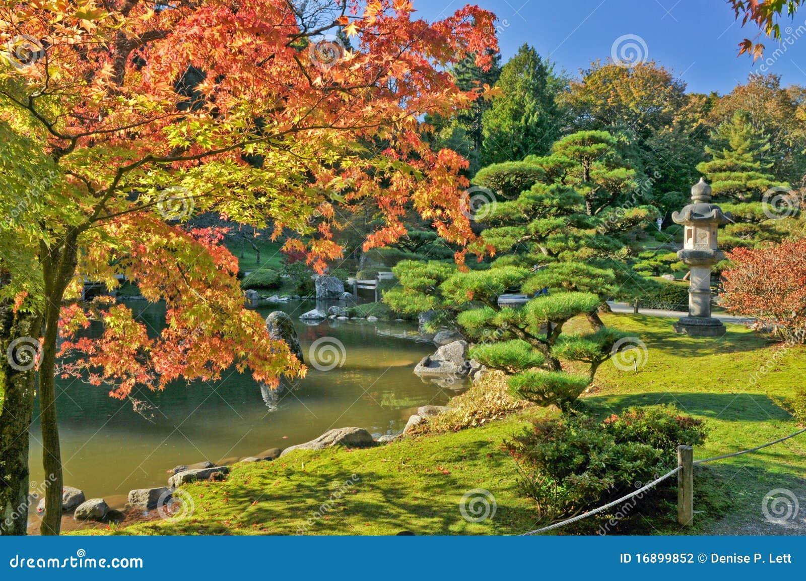 Feuillage et tang d 39 automne dans le jardin japonais for Achat jardin japonais