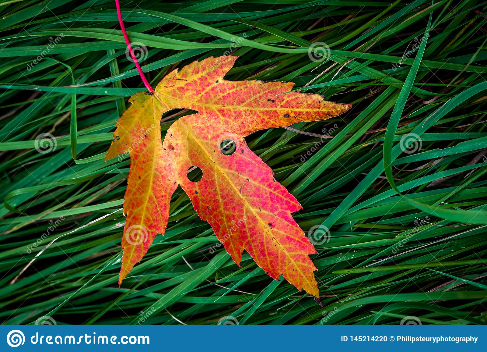 Feuille color?e d automne