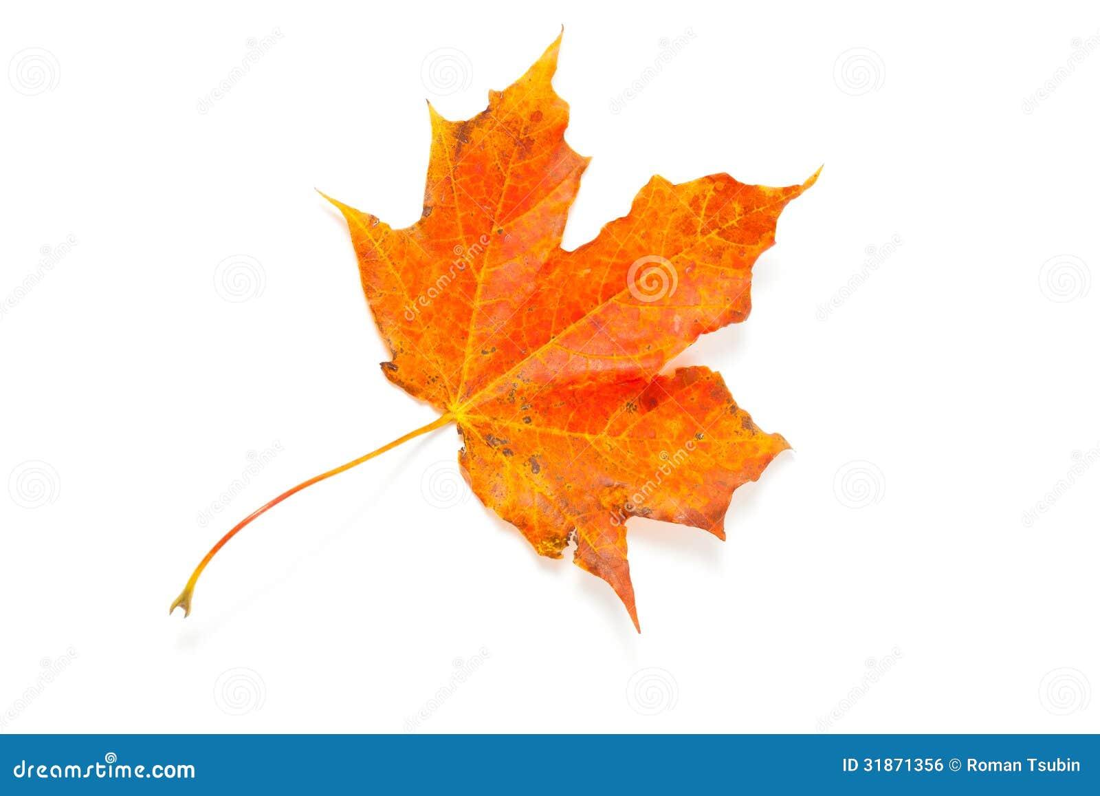 Feuille d 39 rable d 39 automne photo stock image du fond - Image feuille automne ...