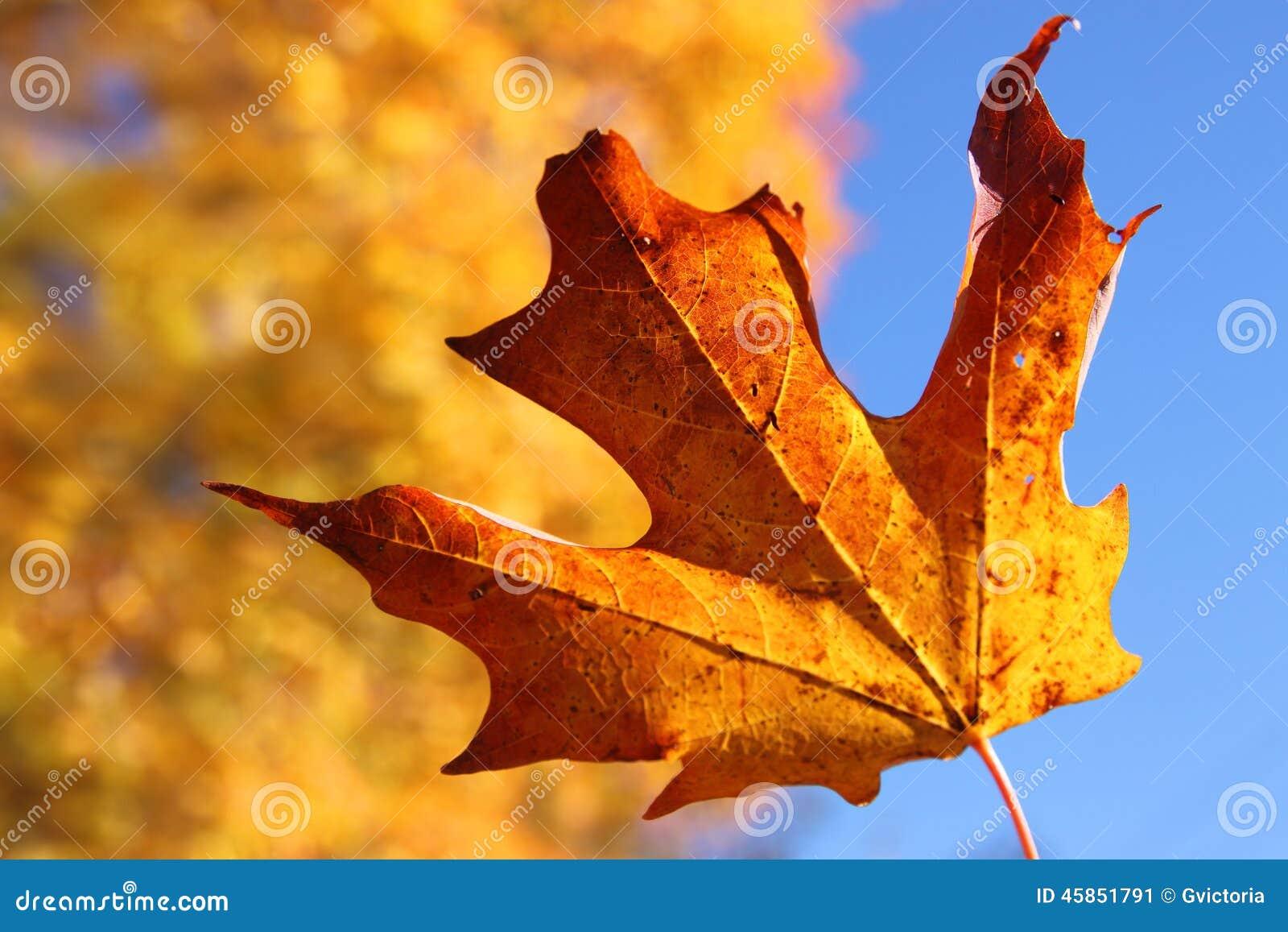 Feuille d érable orange en automne