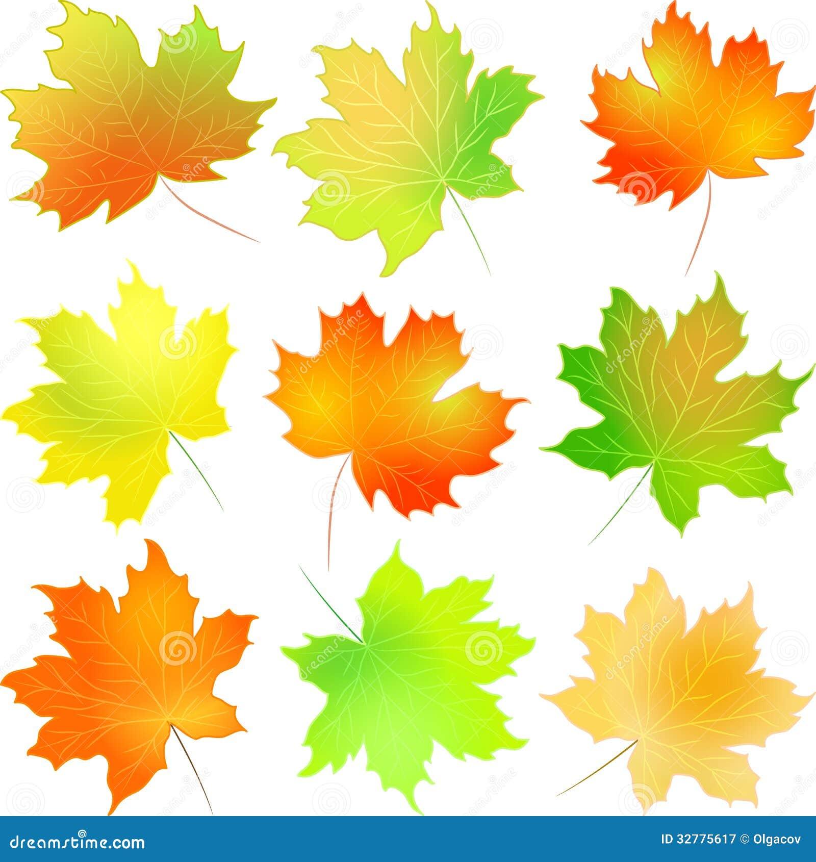 Feuille d 39 rable r gl e d 39 automne de vecteur illustration - Image feuille automne ...