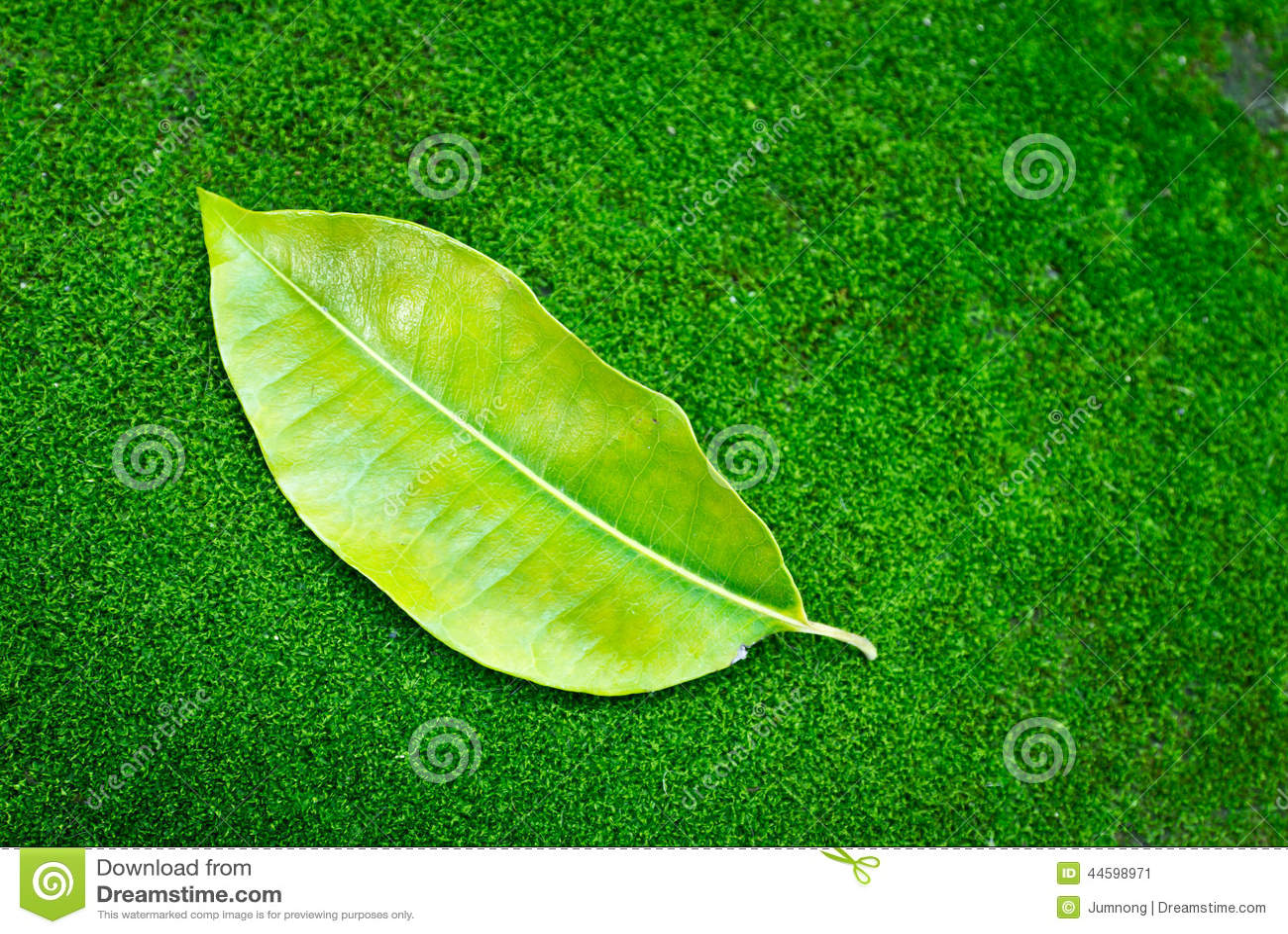 Feuille d 39 arbre sur le fond vert de mousse photo stock image 44598971 - Mousse sur les arbres ...
