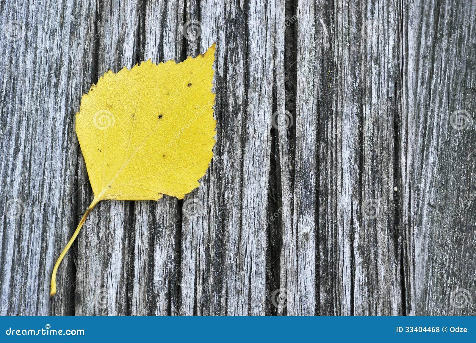 Feuille de bouleau jaune photos libres de droits image - Feuille de bouleau photo ...