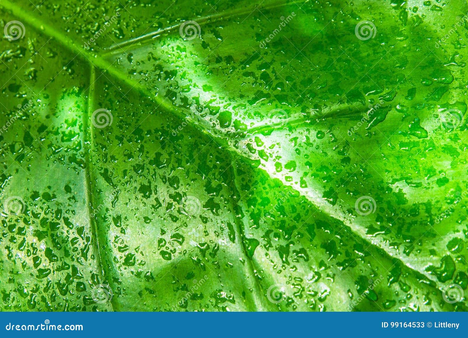 Feuille de forêt tropicale