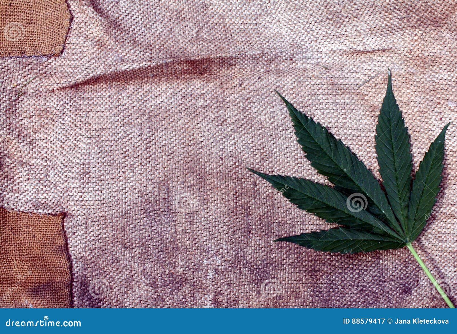 Feuille de marijuana de cannabis et fond grunge sale brut de toile