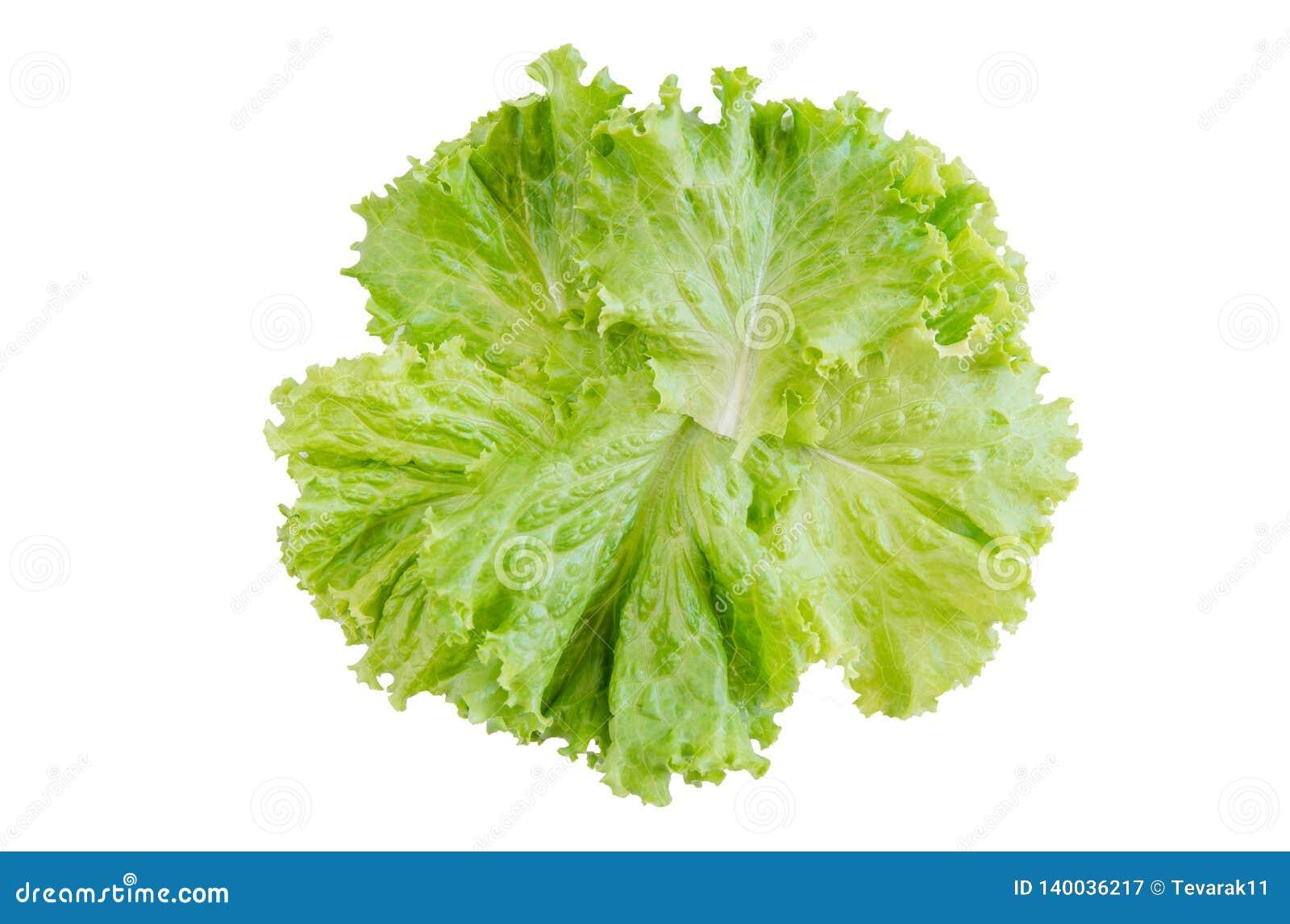 Feuille de salade Laitue d isolement sur le fond blanc Avec le chemin de coupure
