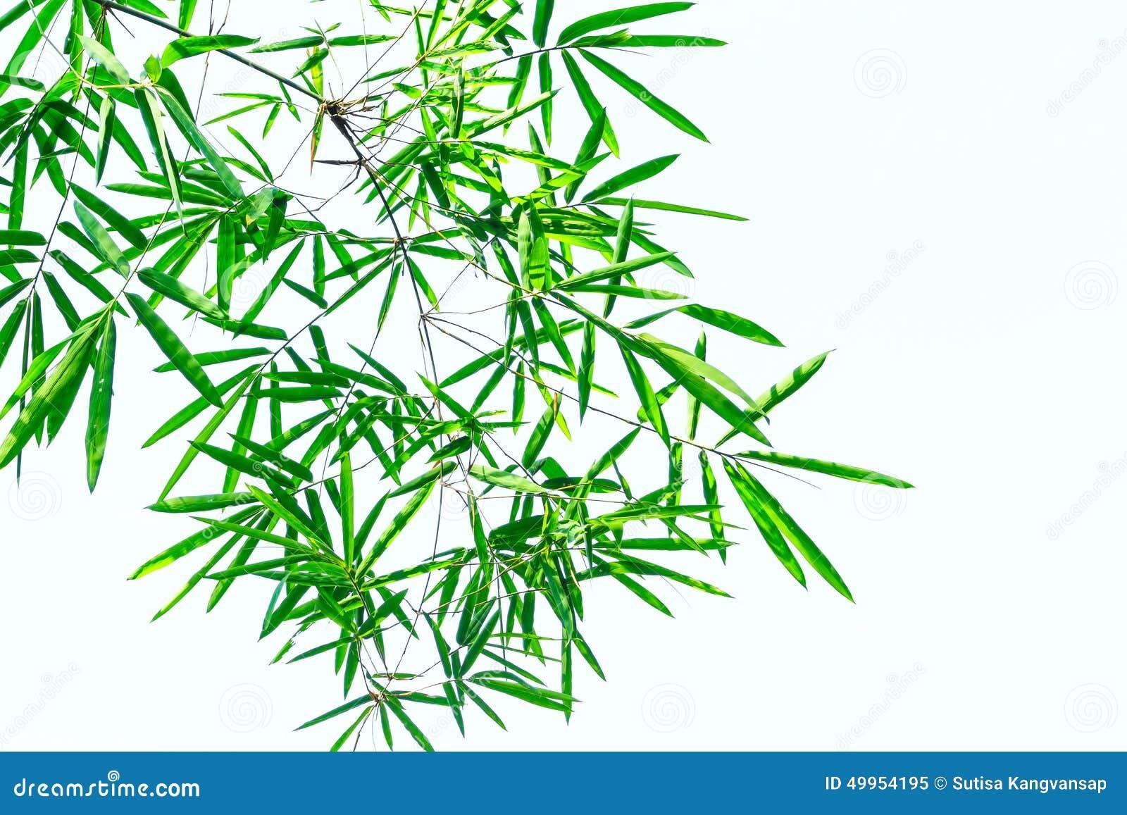 feuille en bambou verte l 39 arri re plan blanc photo stock image 49954195. Black Bedroom Furniture Sets. Home Design Ideas
