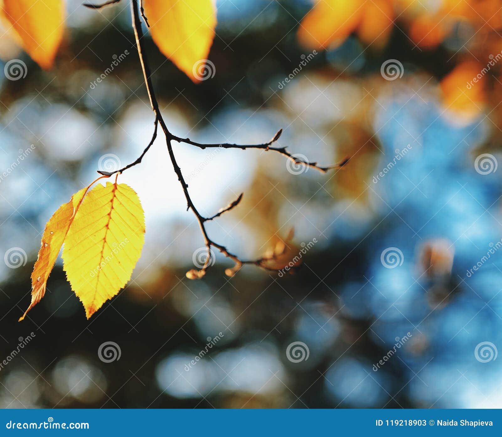 Feuille et ciel d automne