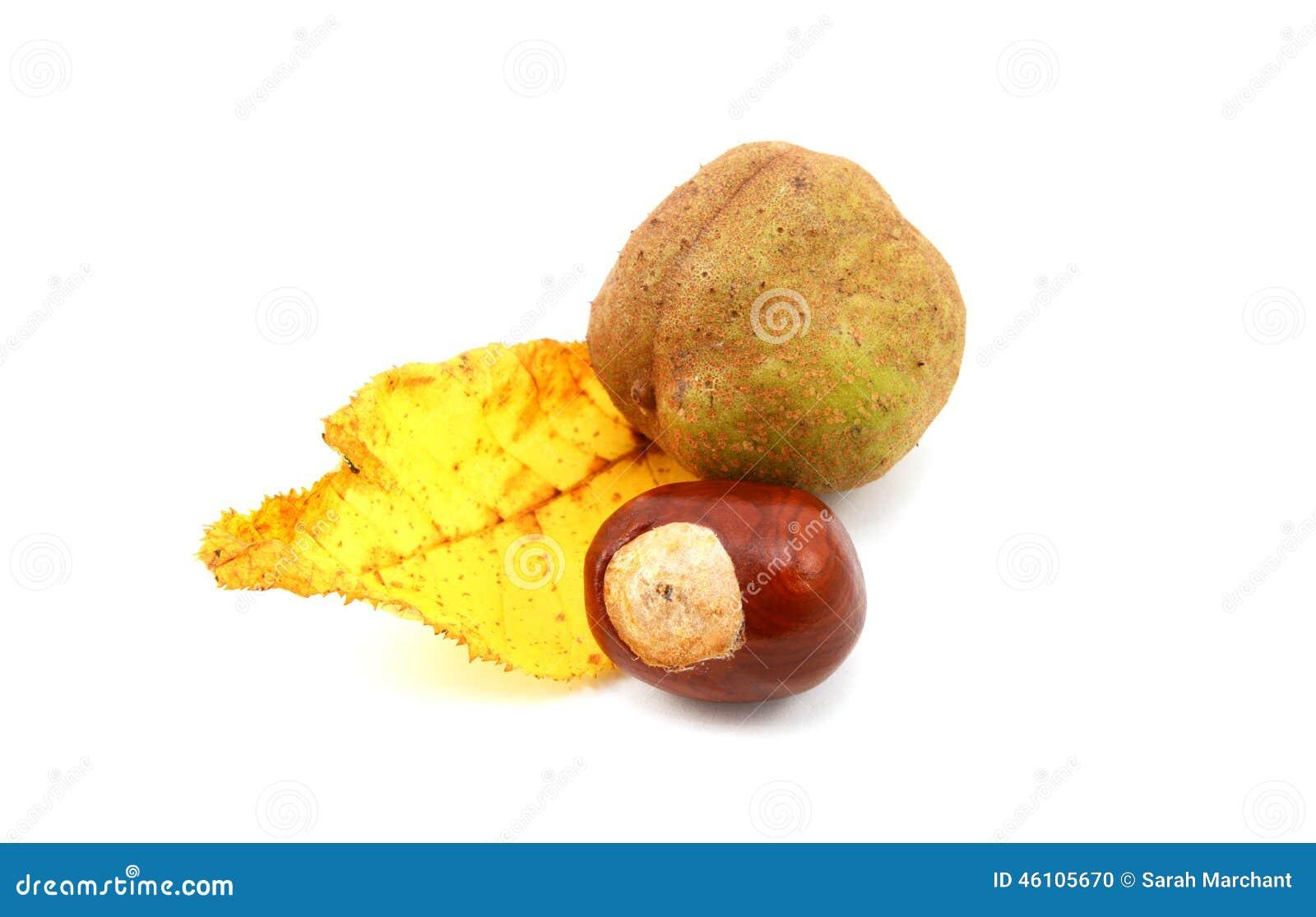 Feuille jaune d 39 automne d 39 un marron d 39 inde rouge avec des marrons photo stock image 46105670 - Activite avec des marrons ...
