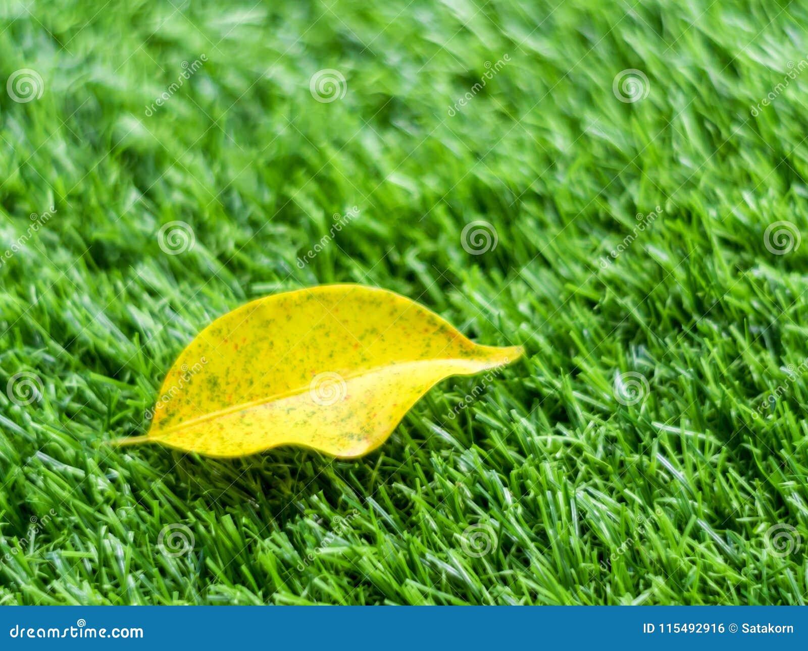 Feuille jaune de chute sur l herbe artificielle par profondeur de fie