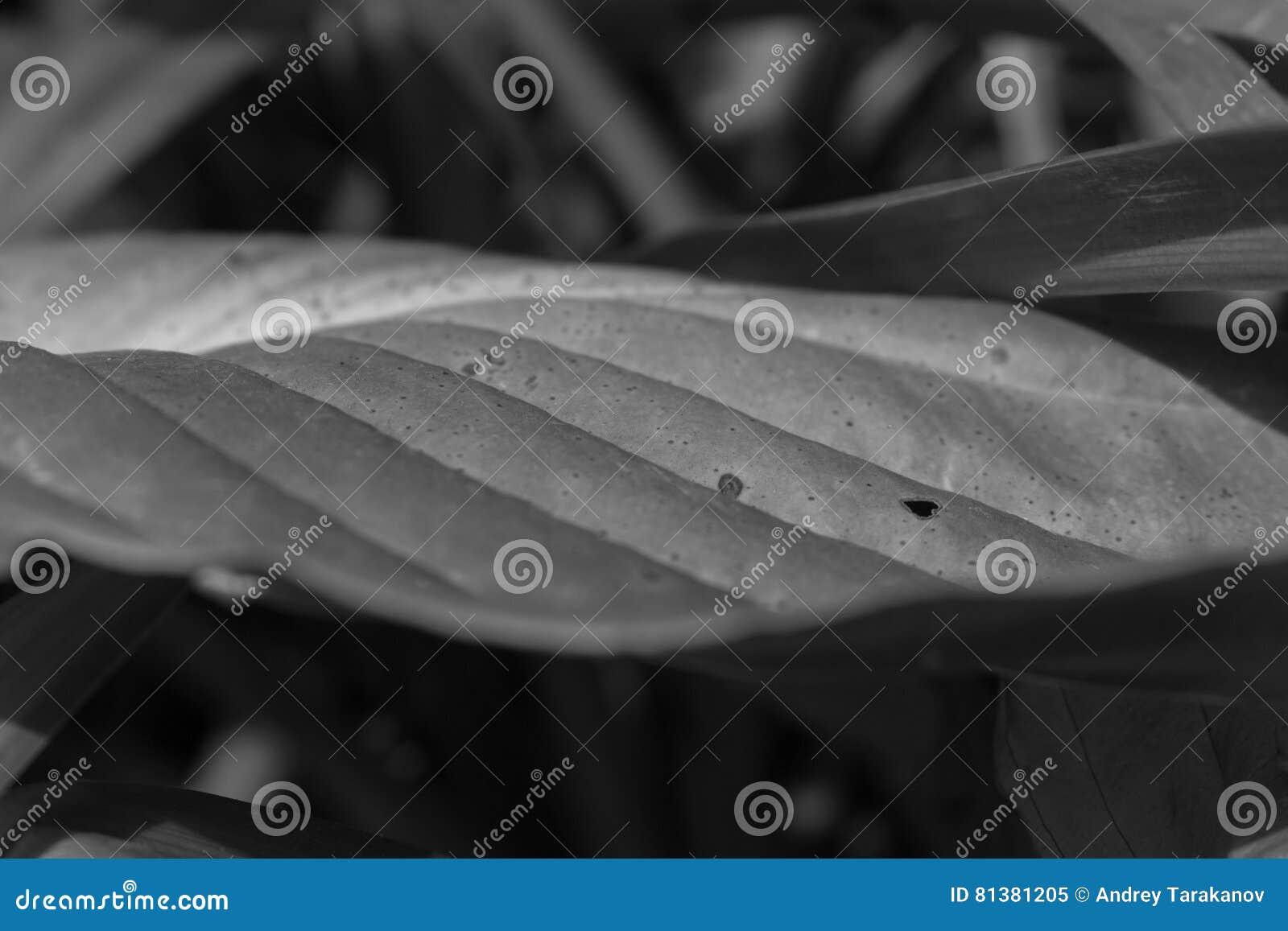Feuille noire et blanche