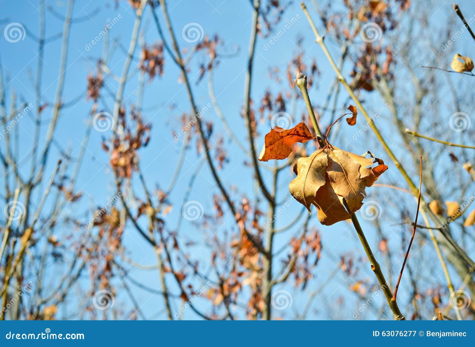 Download Feuille orange sèche image stock. Image du octobre, nature - 63076277