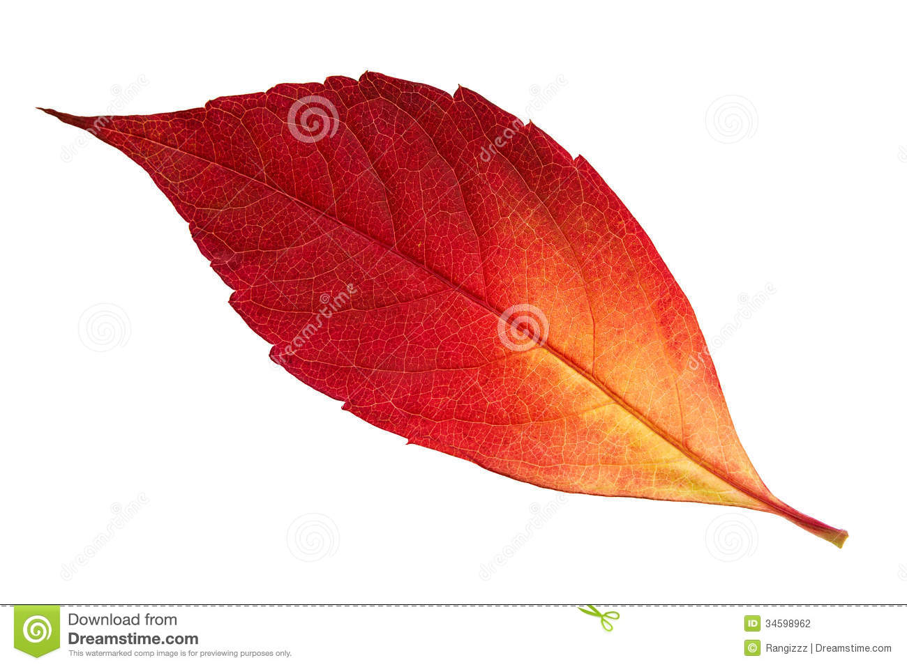 Feuille rouge d 39 automne photographie stock image 34598962 - Arbre feuille rouge automne ...