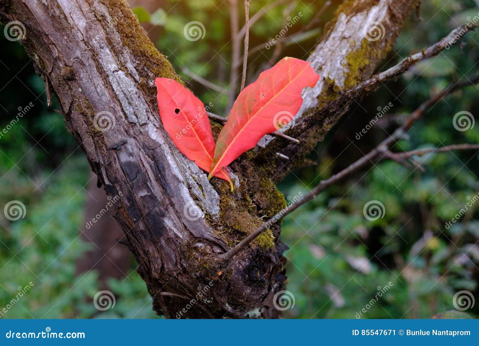 feuille rouge d'automne sur le fond de forêt d'arbre image stock