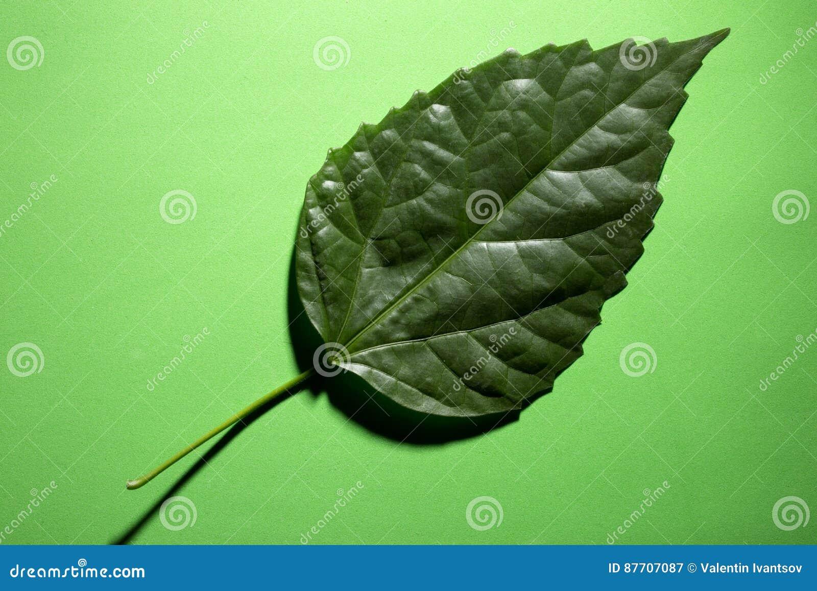Feuille verte d une usine sur un vert