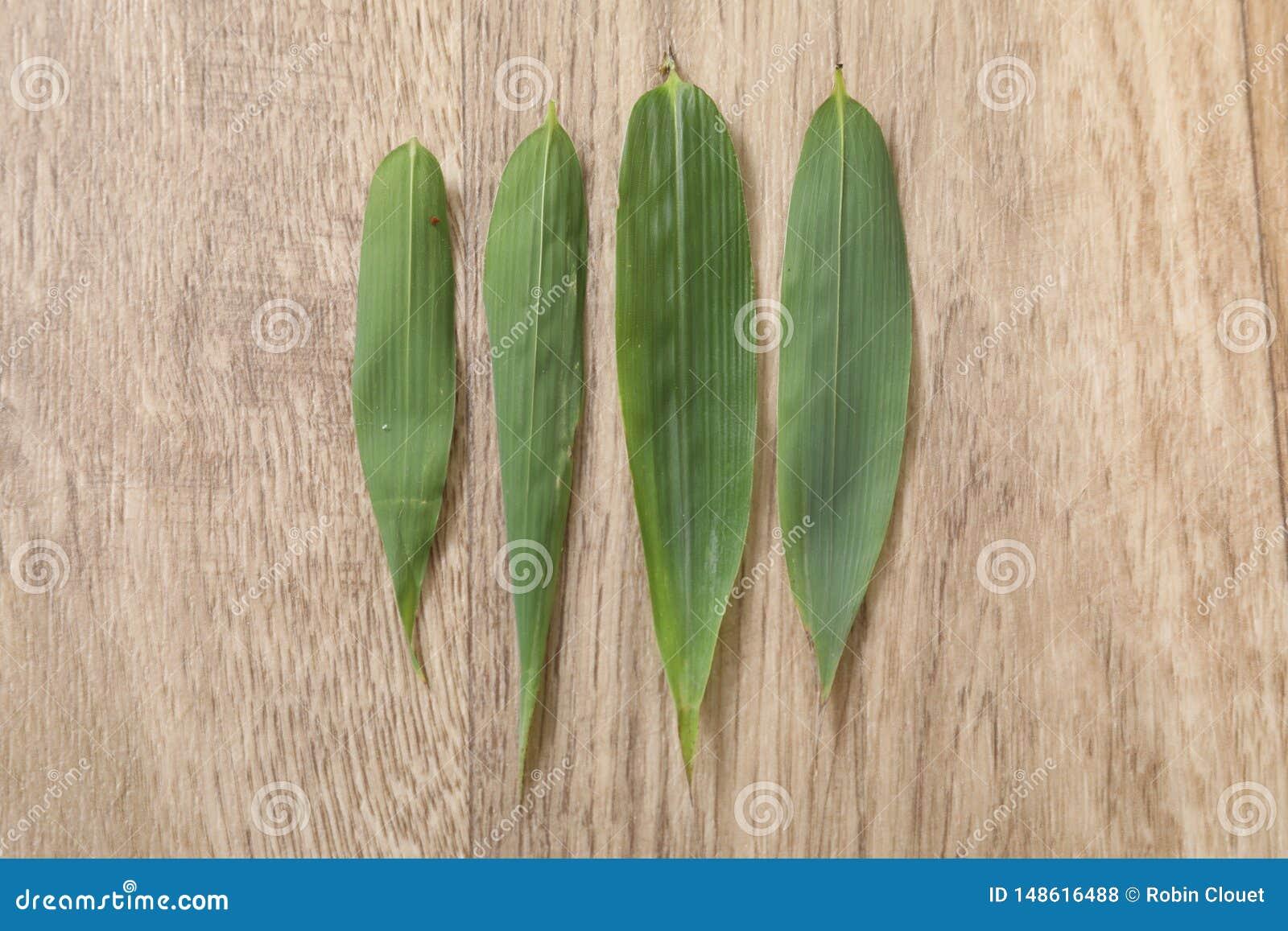 Feuille verte du bambou quatre sur la table en bois