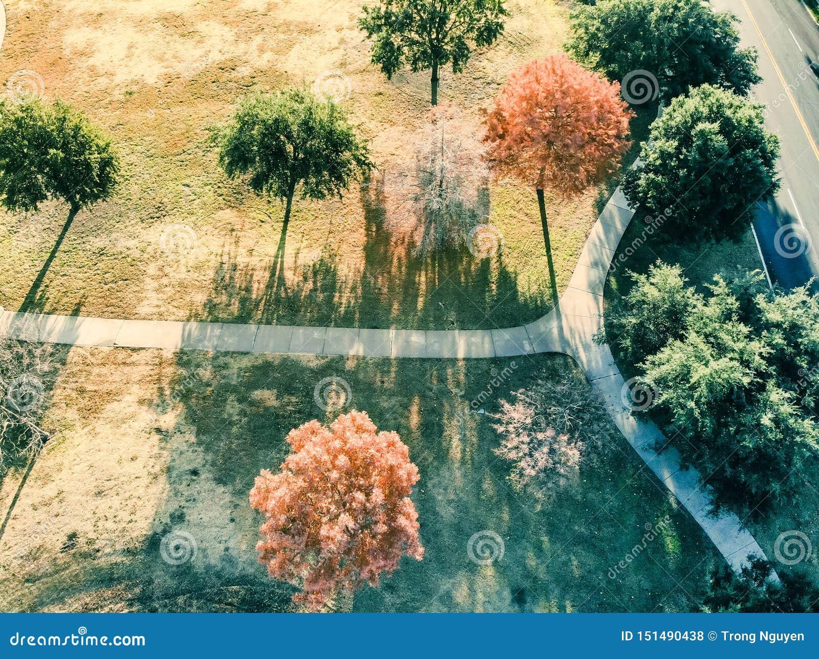 Feuilles d automne colorées de vue aérienne le long de passage couvert de parc près de Dallas, le Texas