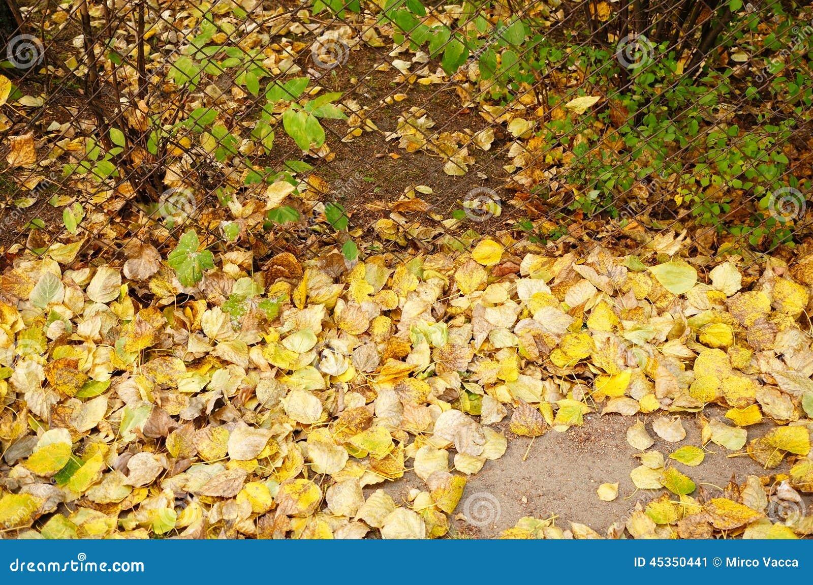 Feuilles d automne de barrière