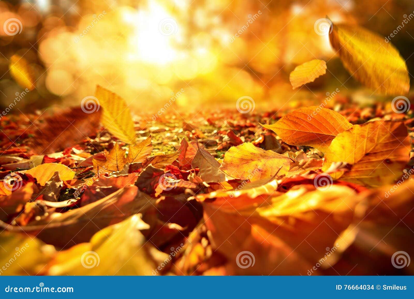 Feuilles d automne en baisse à la lumière du soleil animée