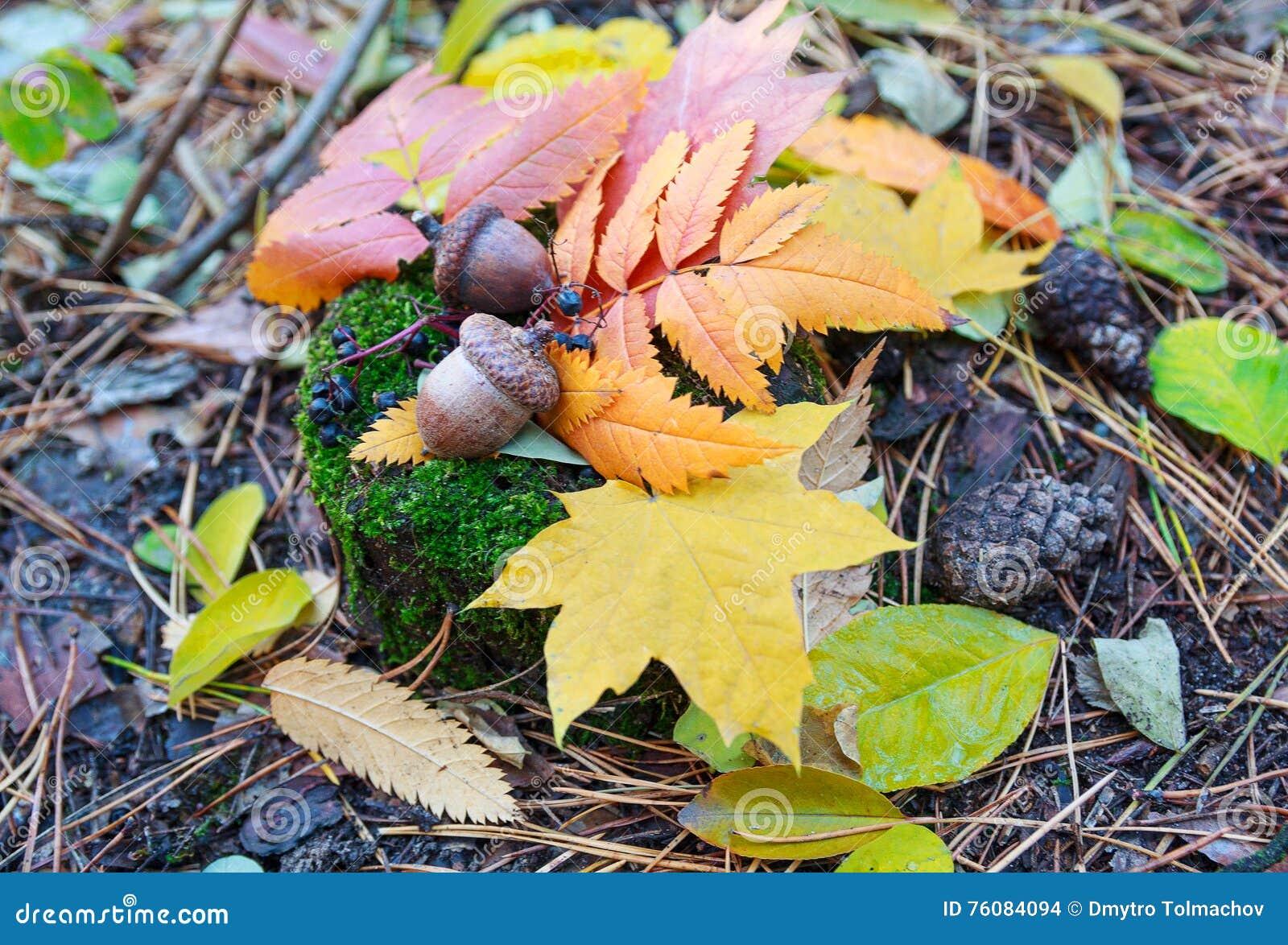 Feuilles d automne et glands colorés