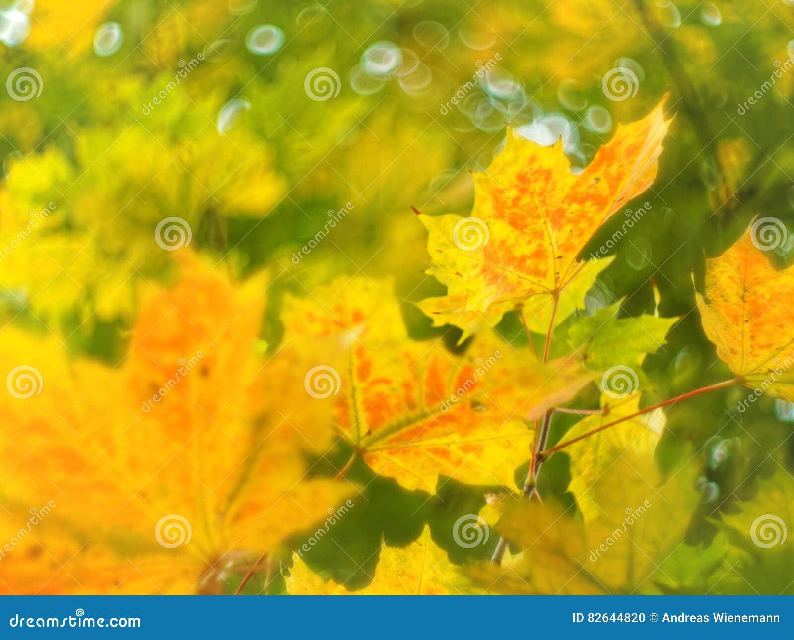 Feuilles d automne et swirly un bokeh