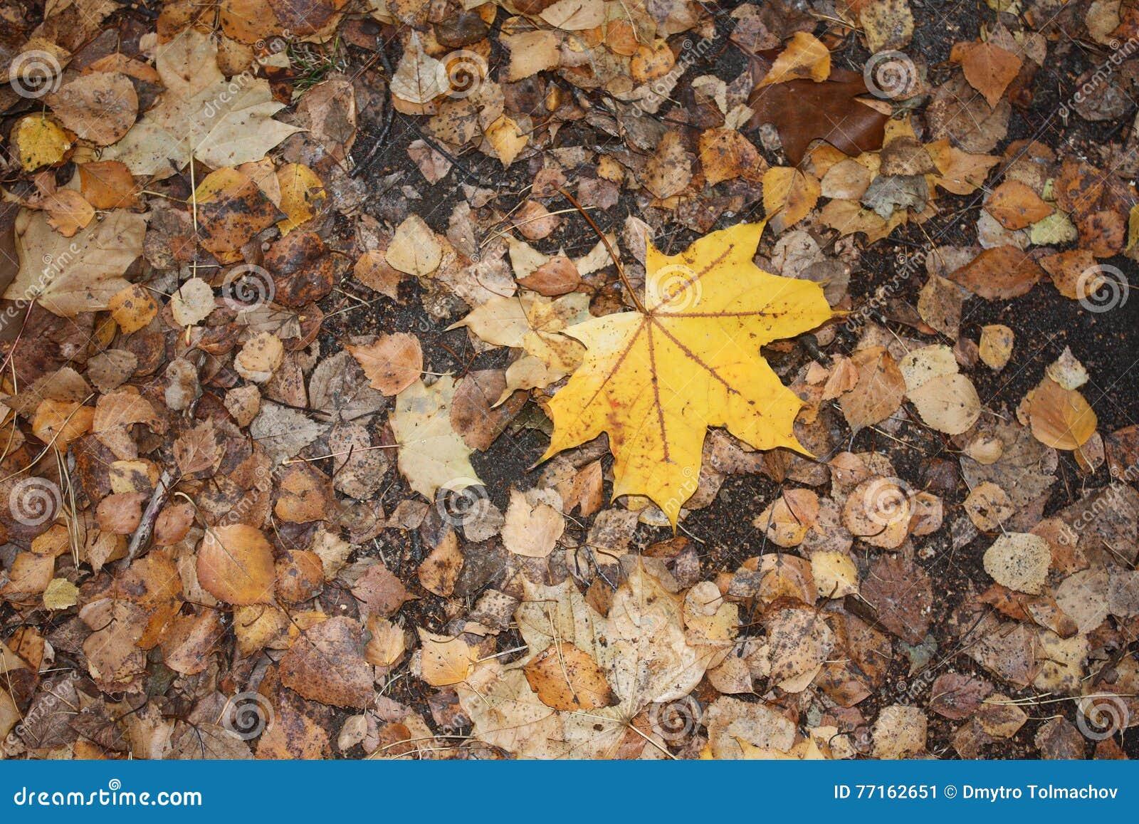 Feuilles d automne humides après pluie sur la terre