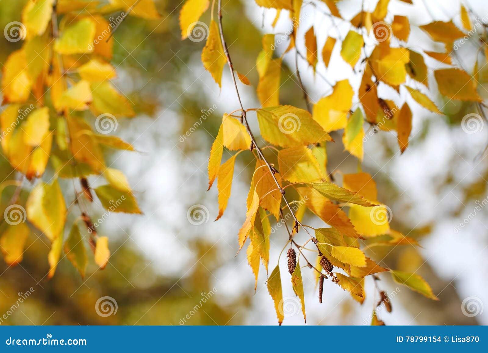 Feuilles d automne jaunes sur le fond naturel