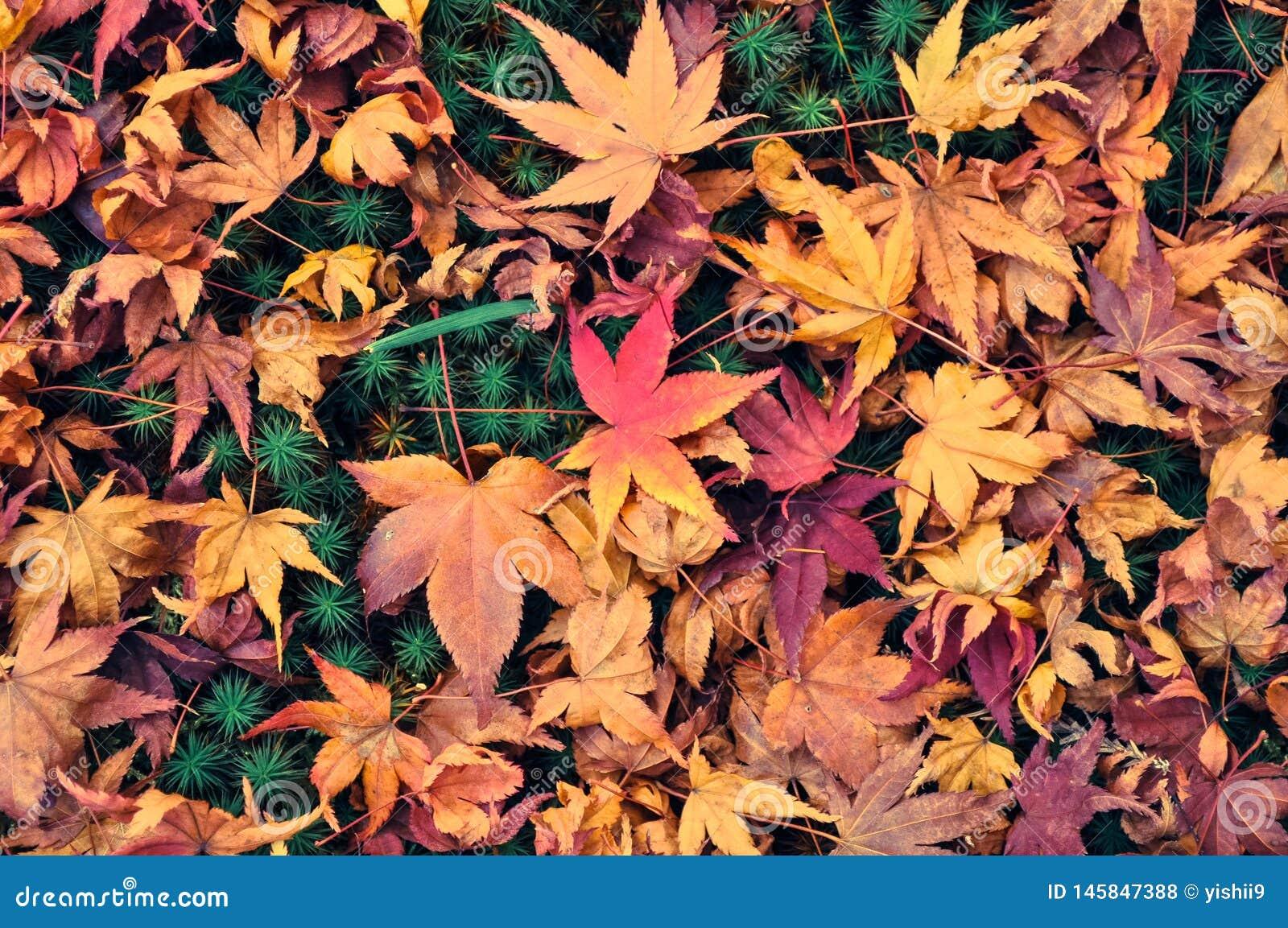 Feuilles d automne sur la terre d un jardin de mousse