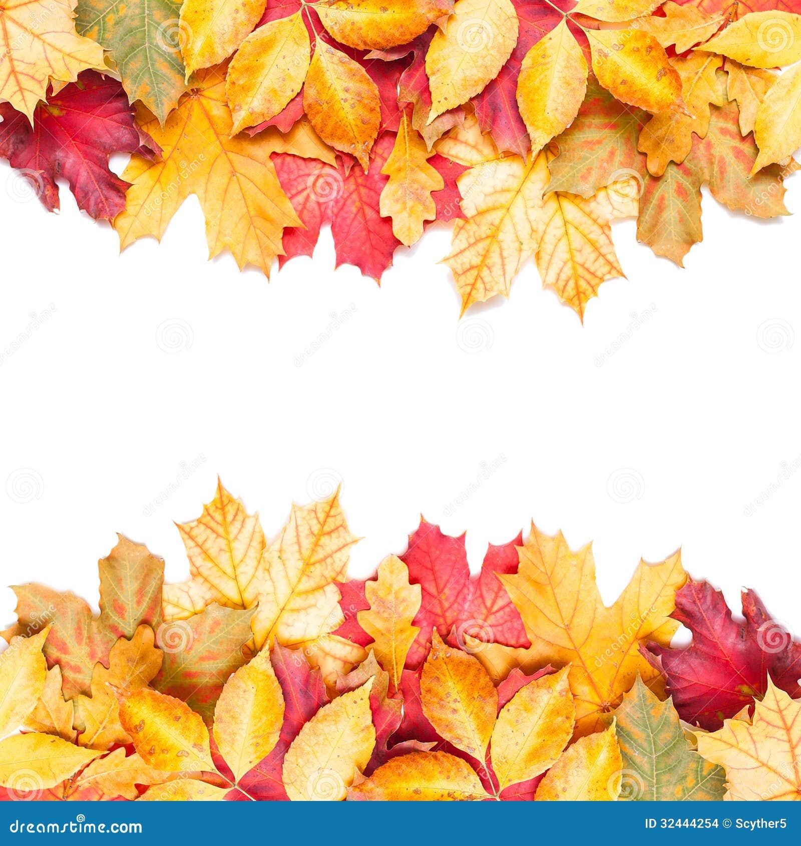 Feuilles d 39 automne sur le fond blanc photo stock image - Image feuille automne ...