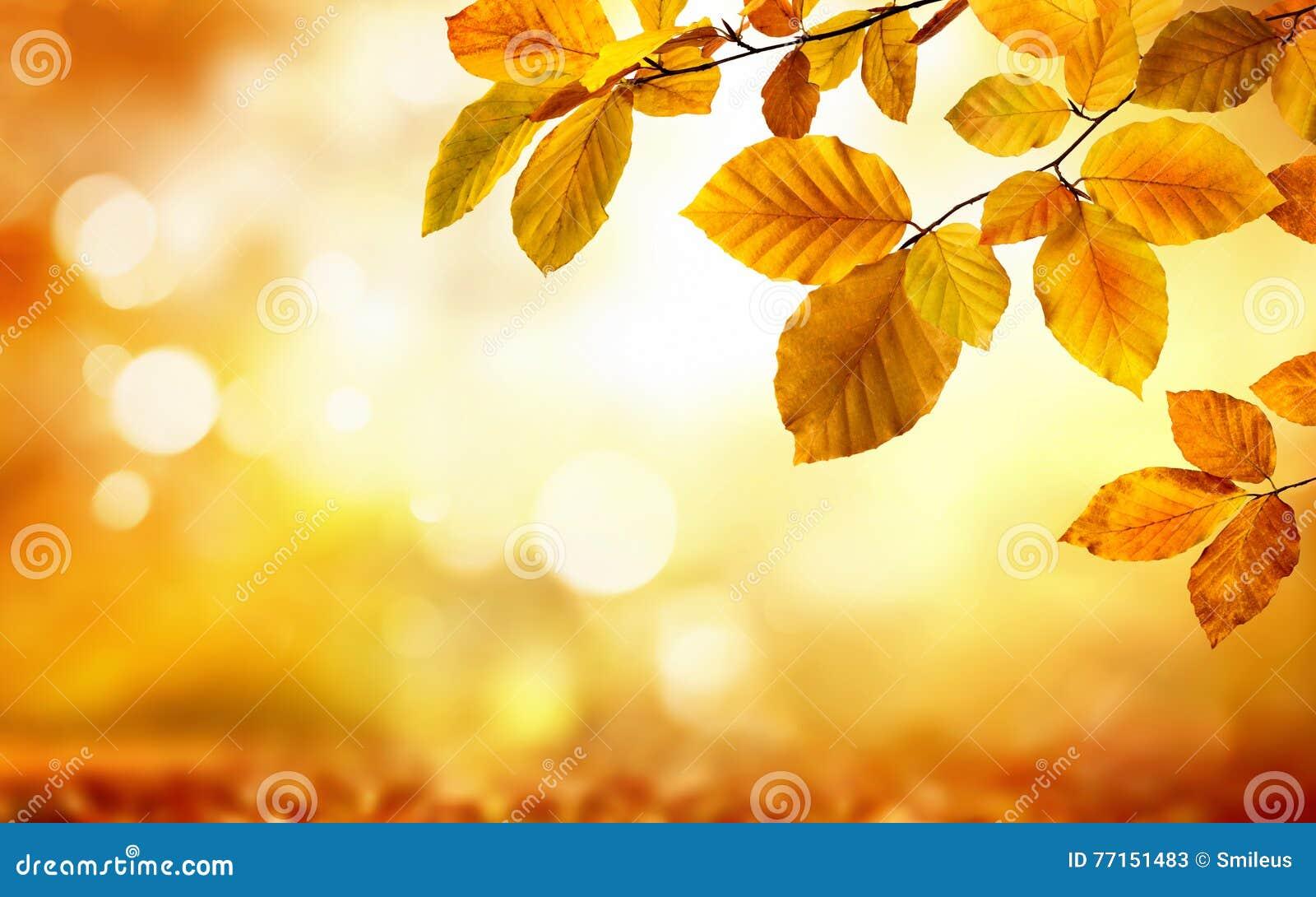 Feuilles d automne sur le fond trouble rougeoyant