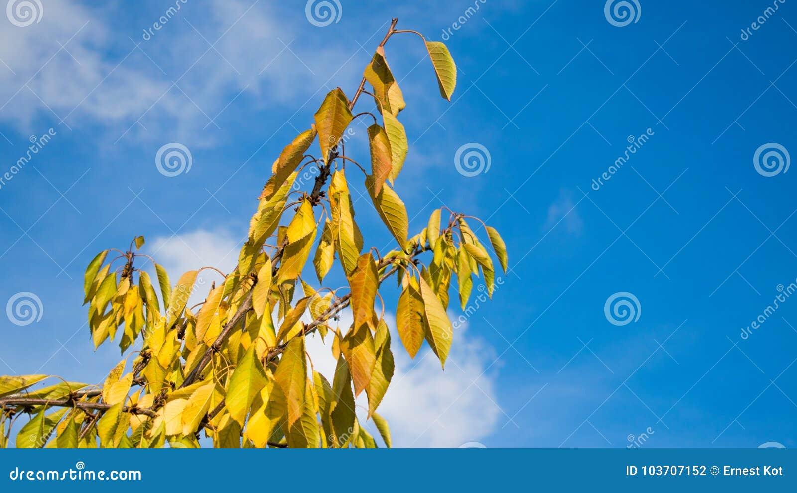 Feuilles dans le jour d automne