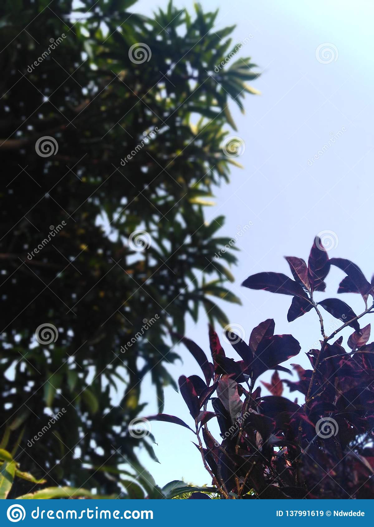 Feuilles de fleurs de cuvette de ciel