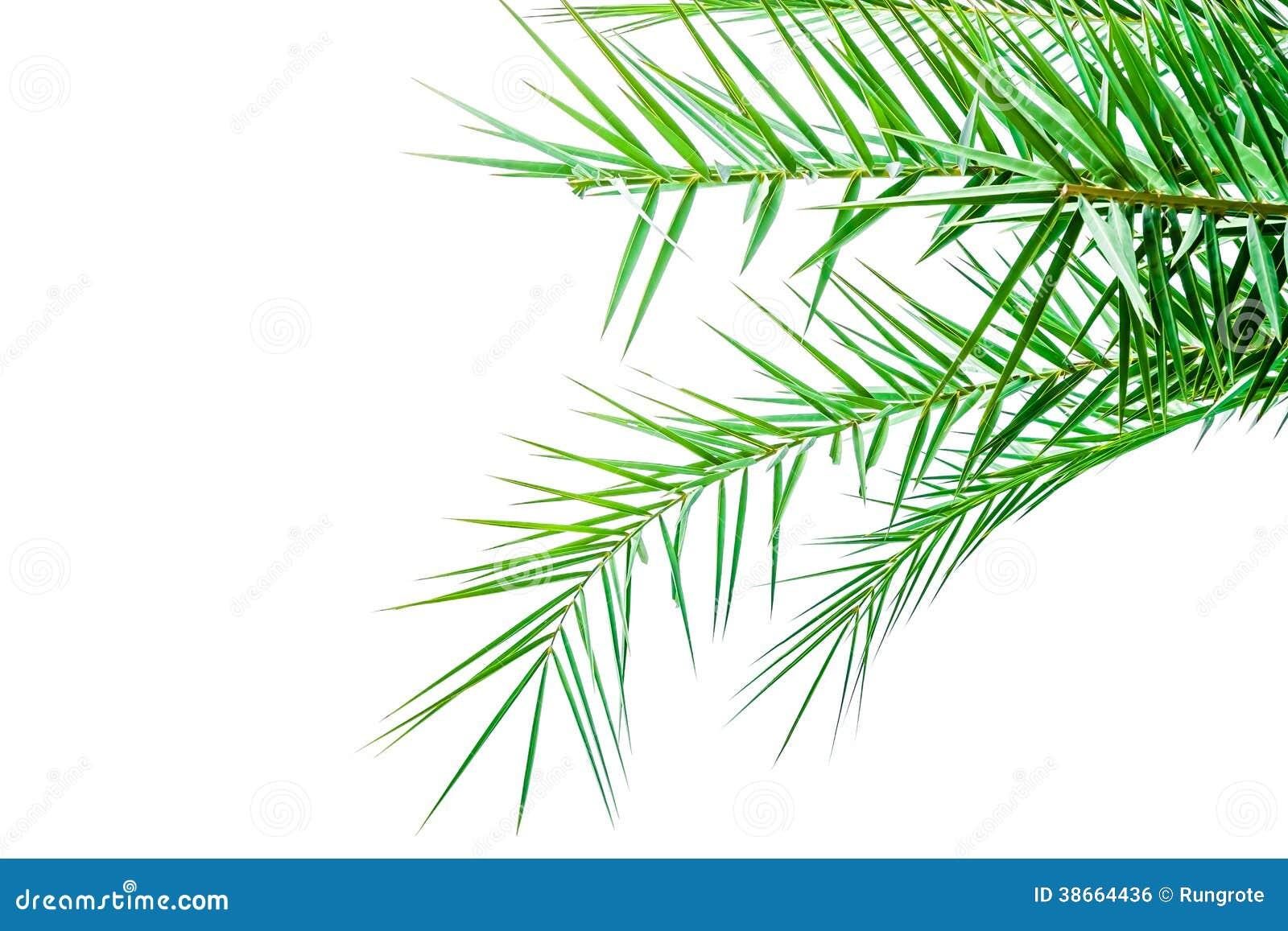 feuilles de palmier d 39 isolement sur le fond blanc image libre de droits image 38664436. Black Bedroom Furniture Sets. Home Design Ideas