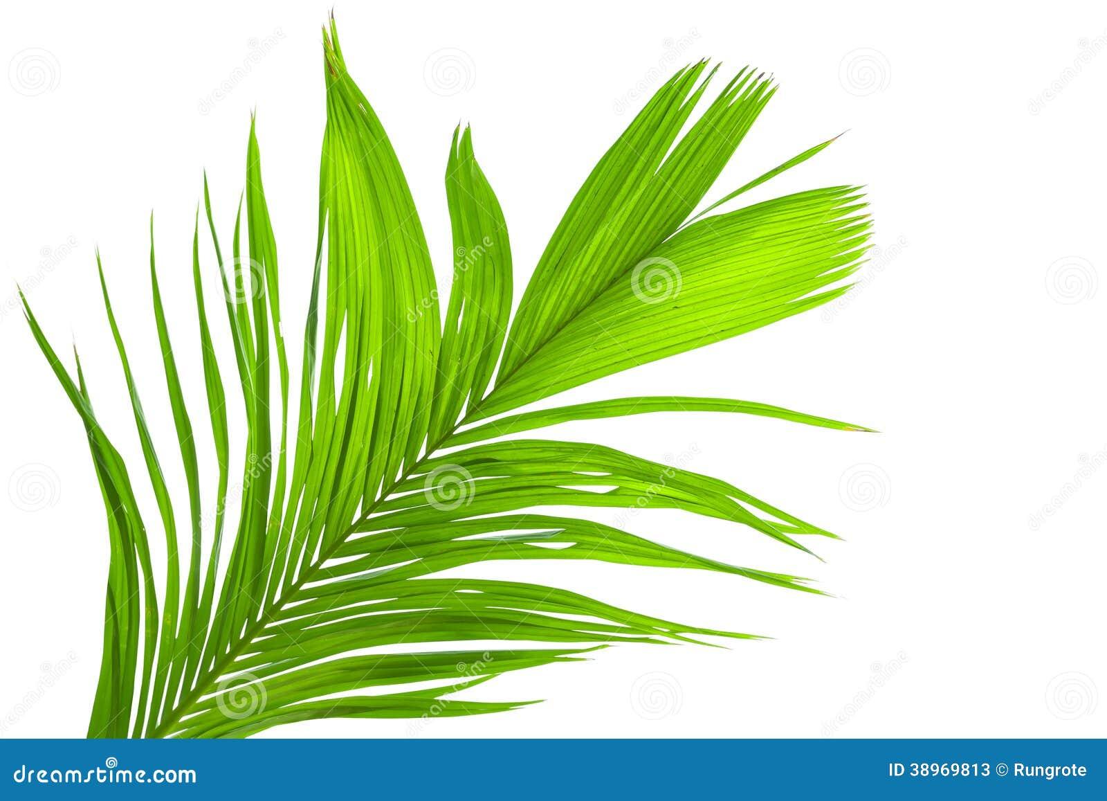 feuilles de palmier d 39 isolement sur le fond blanc photo stock image 38969813. Black Bedroom Furniture Sets. Home Design Ideas