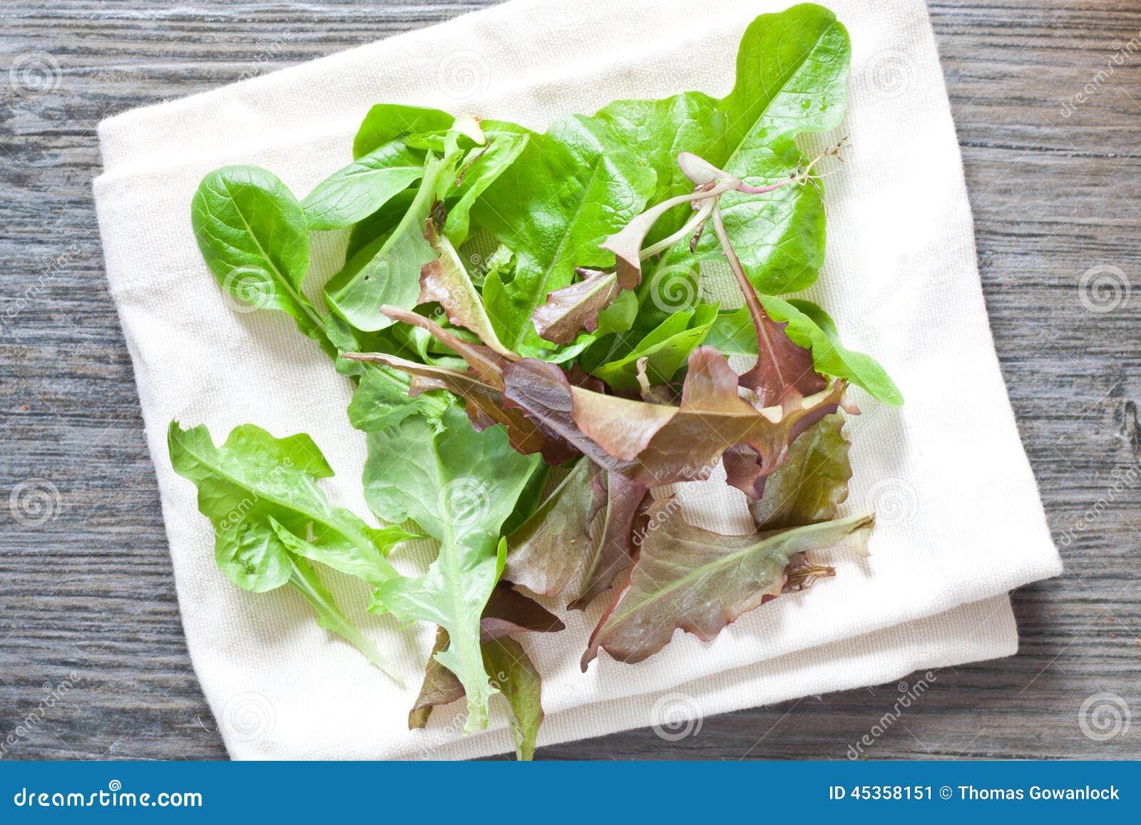 Feuilles de salade de bébé