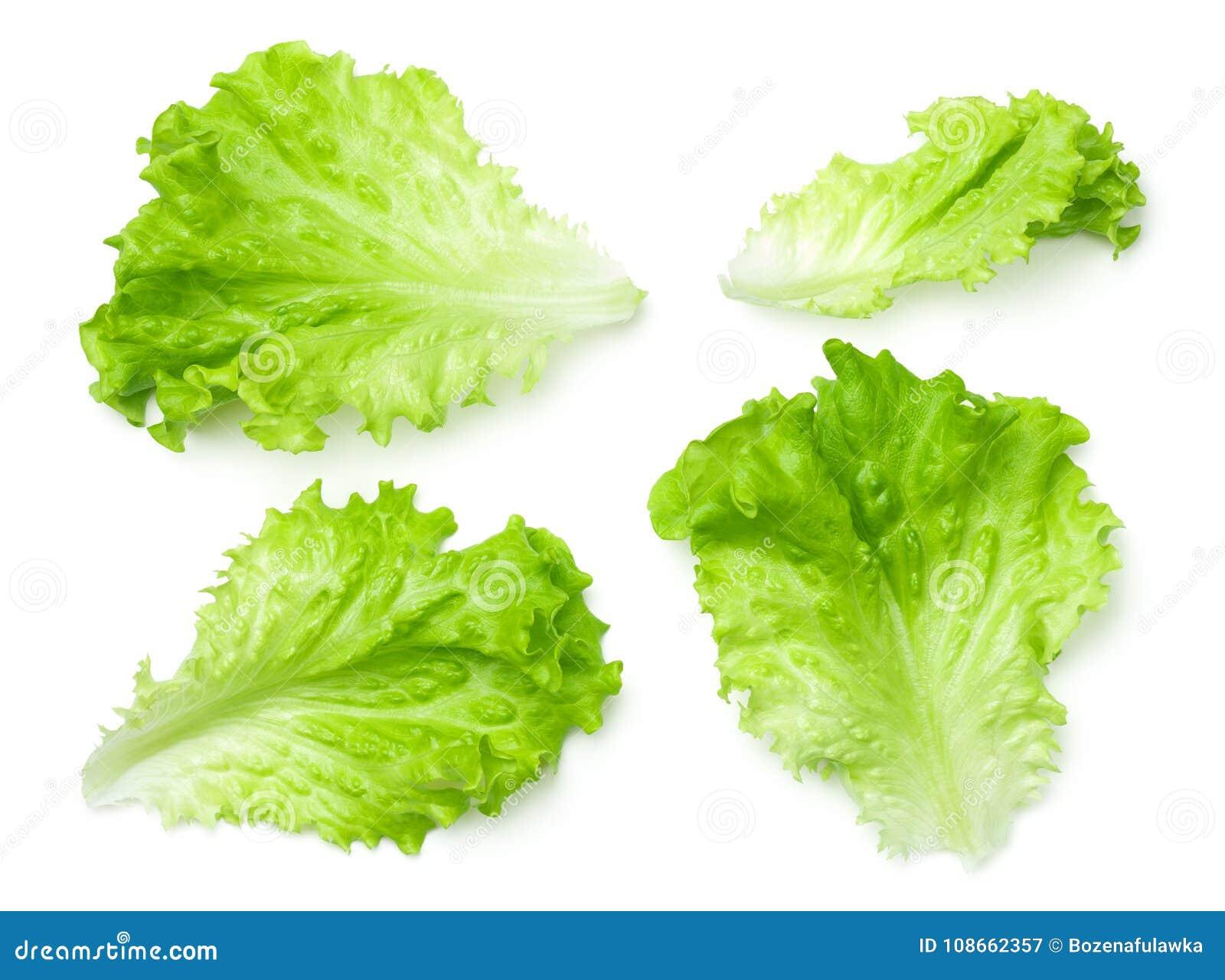 Feuilles de salade de laitue d isolement sur le fond blanc