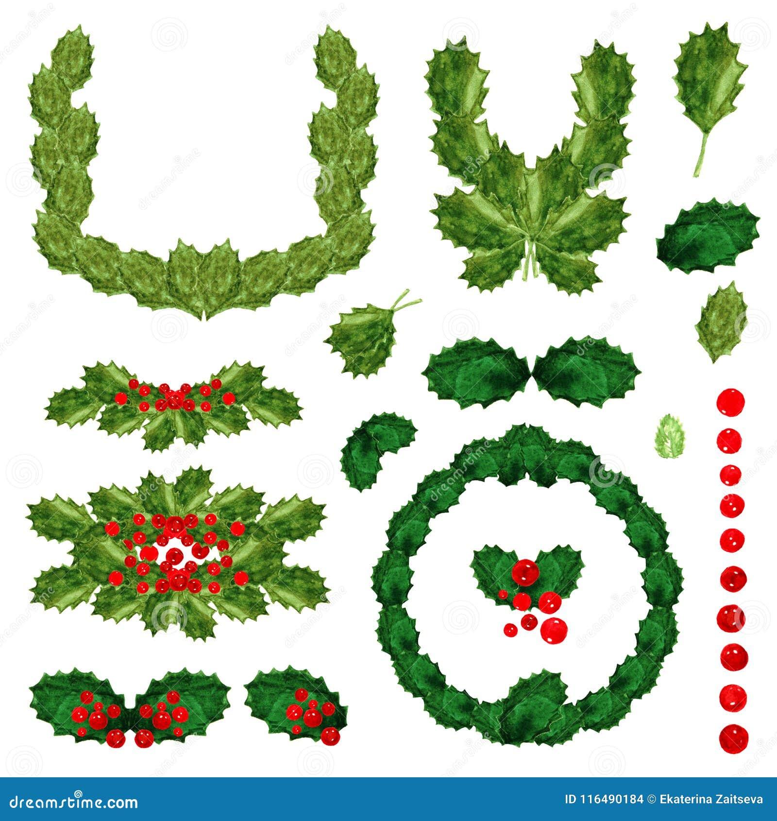 Feuilles De Vert De Houx Et Brillamment Dessin Rouge Daquarelle De