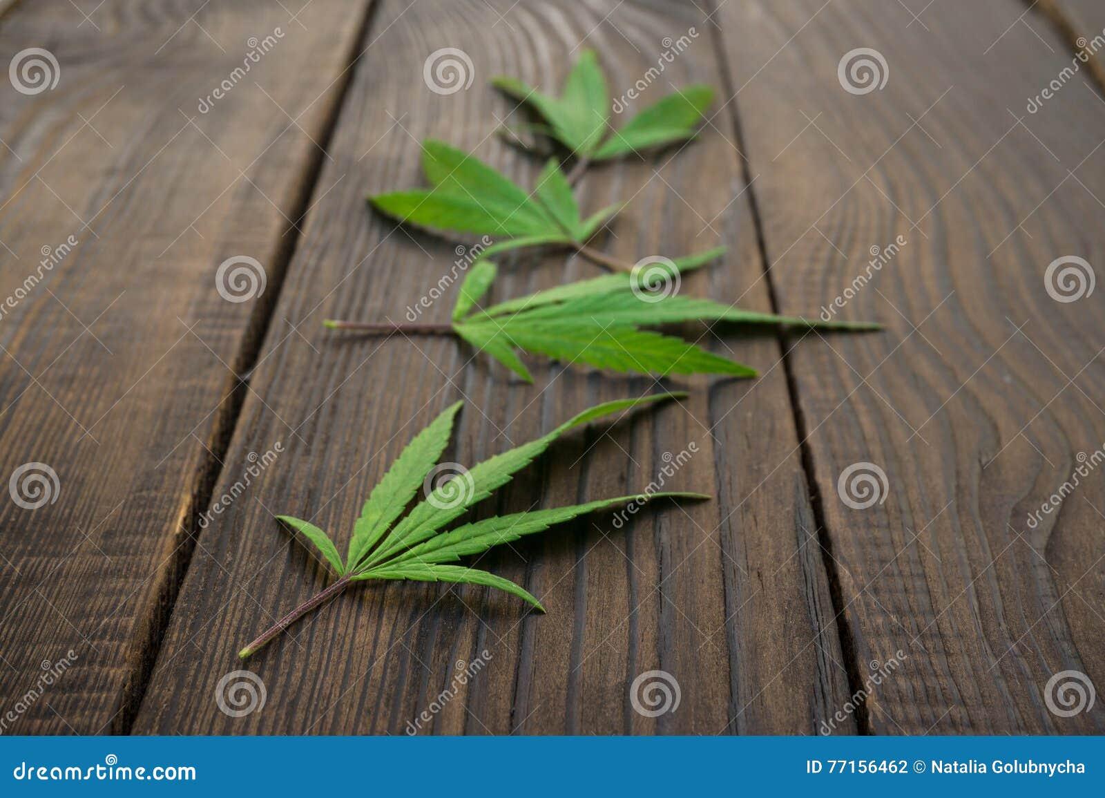 Feuilles des cannabis sur la surface en bois foncée Plan rapproché