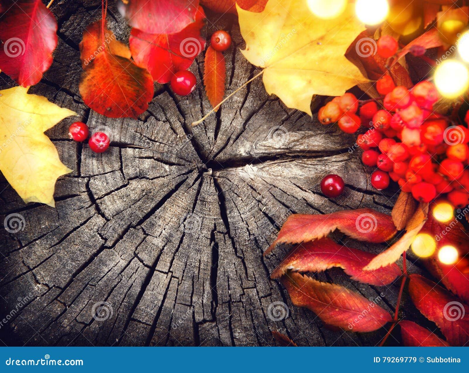 Feuilles et canneberges d automne au-dessus de bois criqué