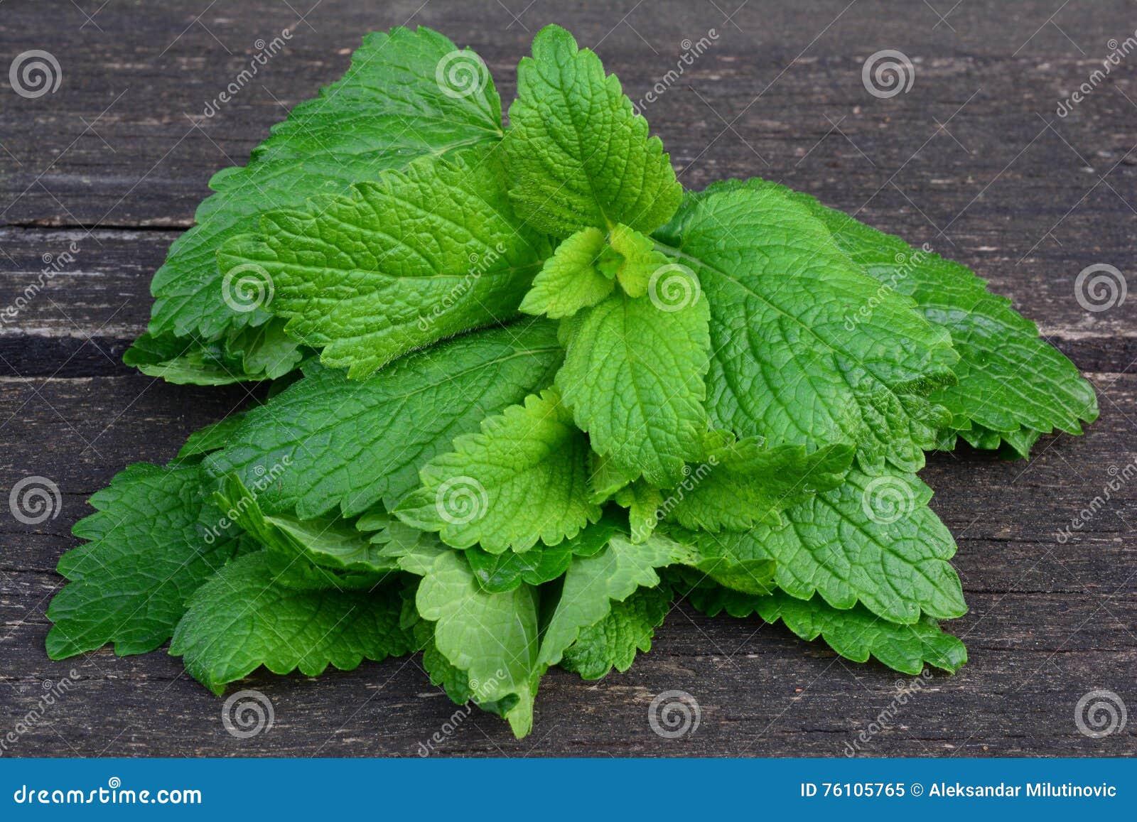 feuilles fraîches et jeunes de baume de citron image stock - image