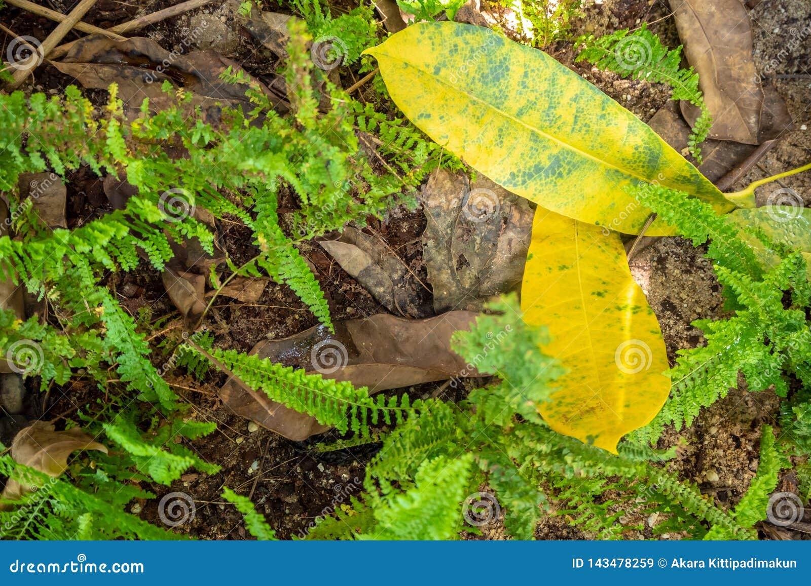 Feuilles jaunes au sol parmi les feuilles et les fougères sèches