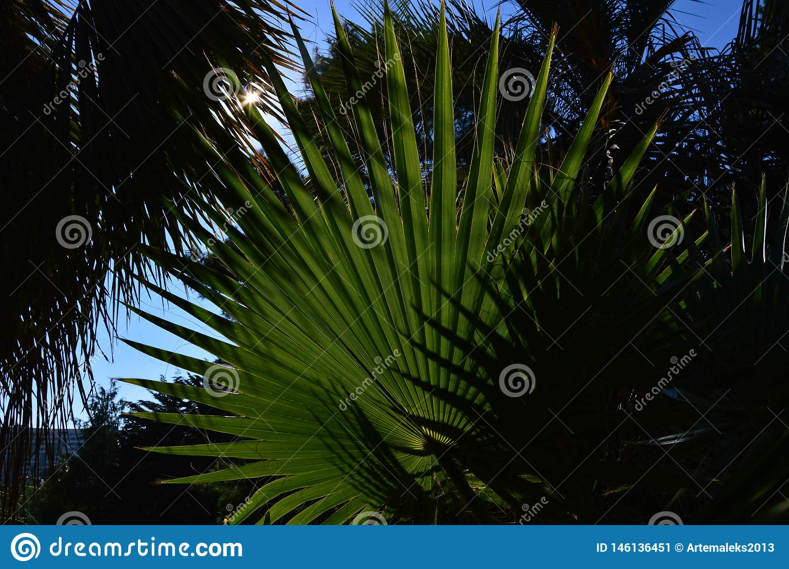 Feuilles pointues vertes contre le ciel bleu dans les tropiques