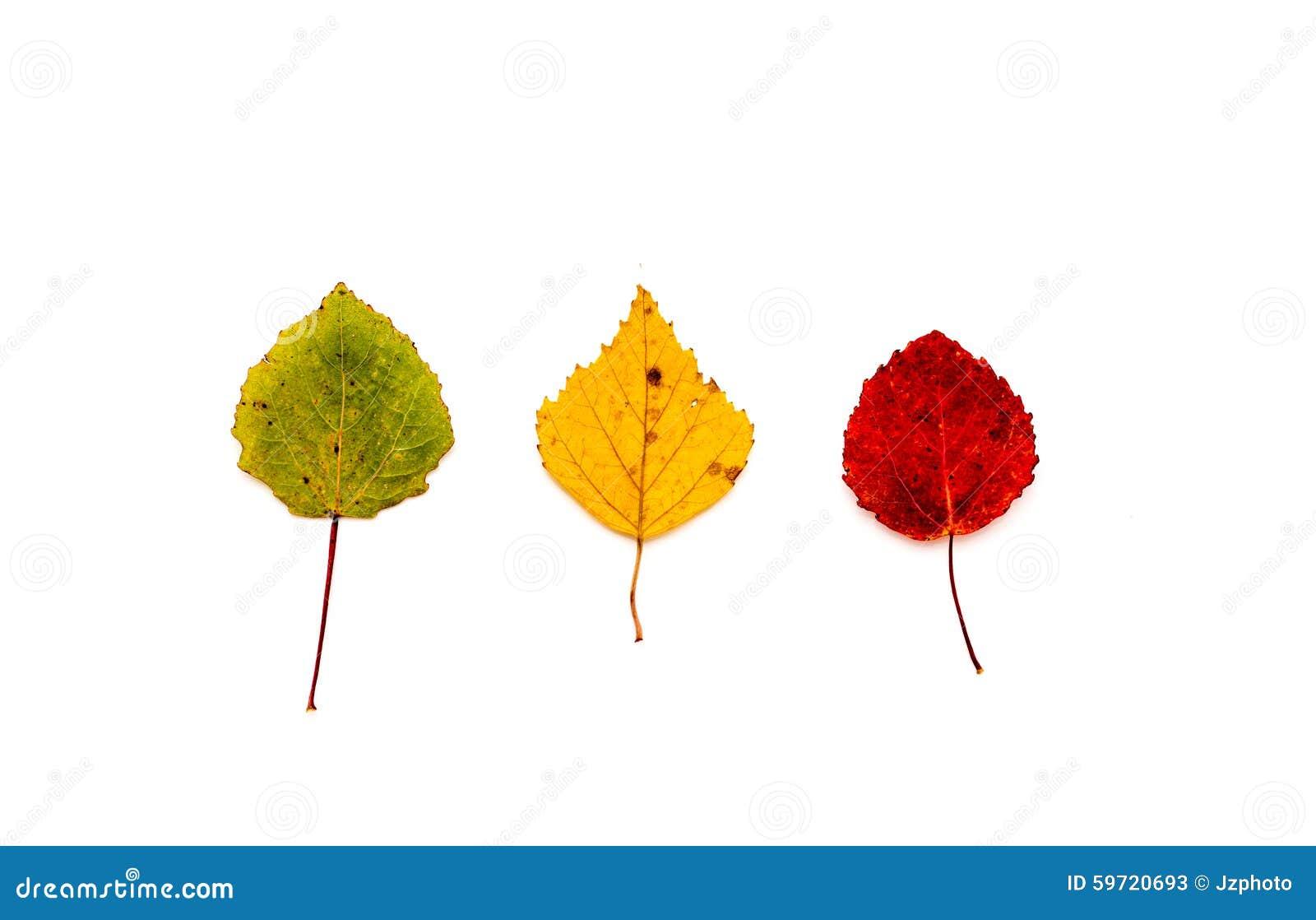 Feuilles vert jaune et rouge d 39 arbre photo stock image 59720693 - Arbre feuille rouge toute l annee ...