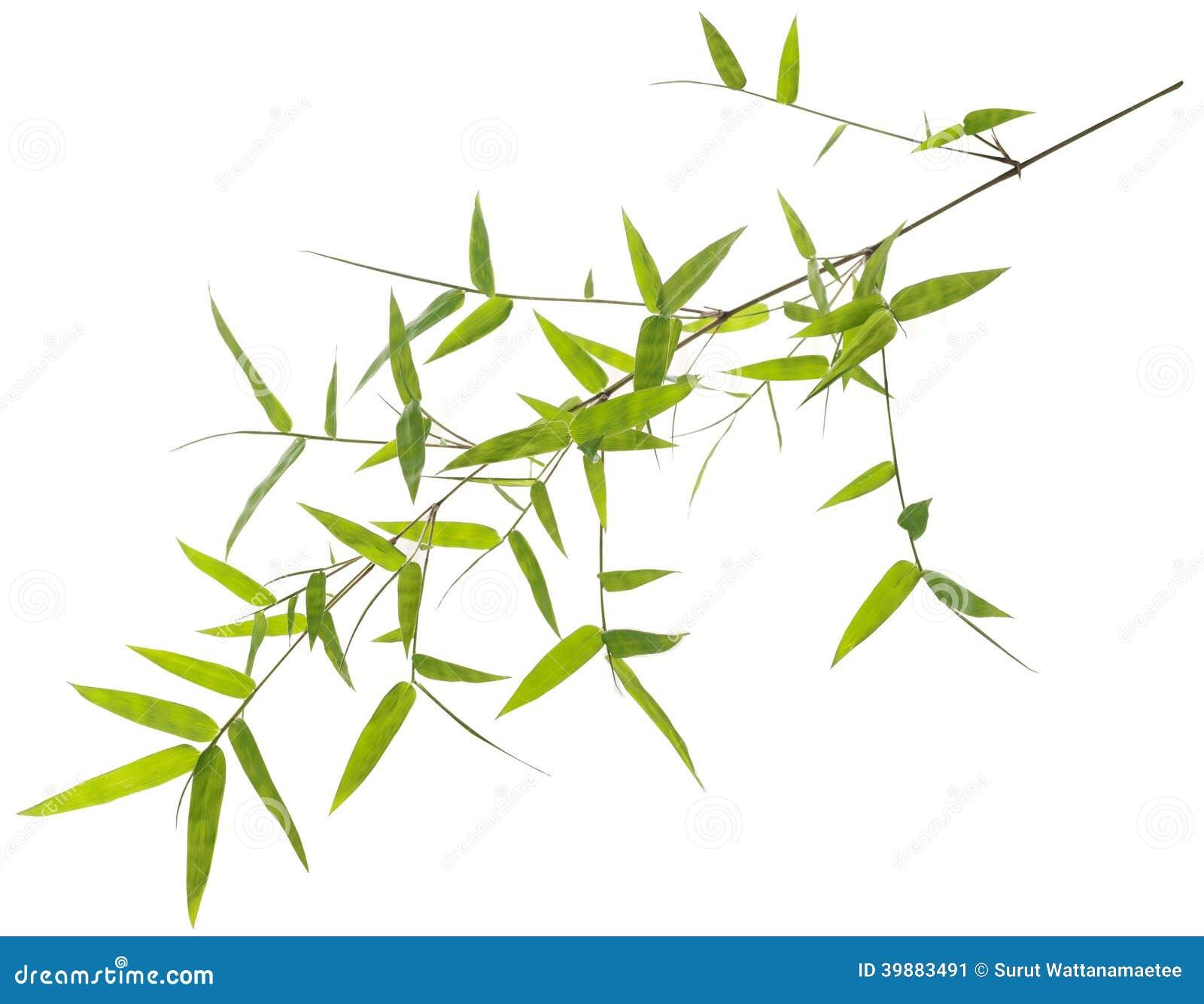 feuilles vertes de bambou d 39 isolement sur le blanc photo stock image 39883491. Black Bedroom Furniture Sets. Home Design Ideas