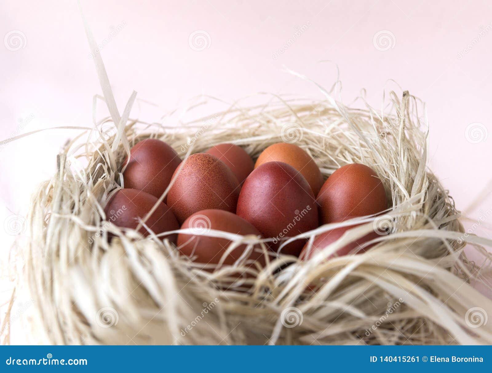 Few brown eggs in the nest, Easter, boiled eggs