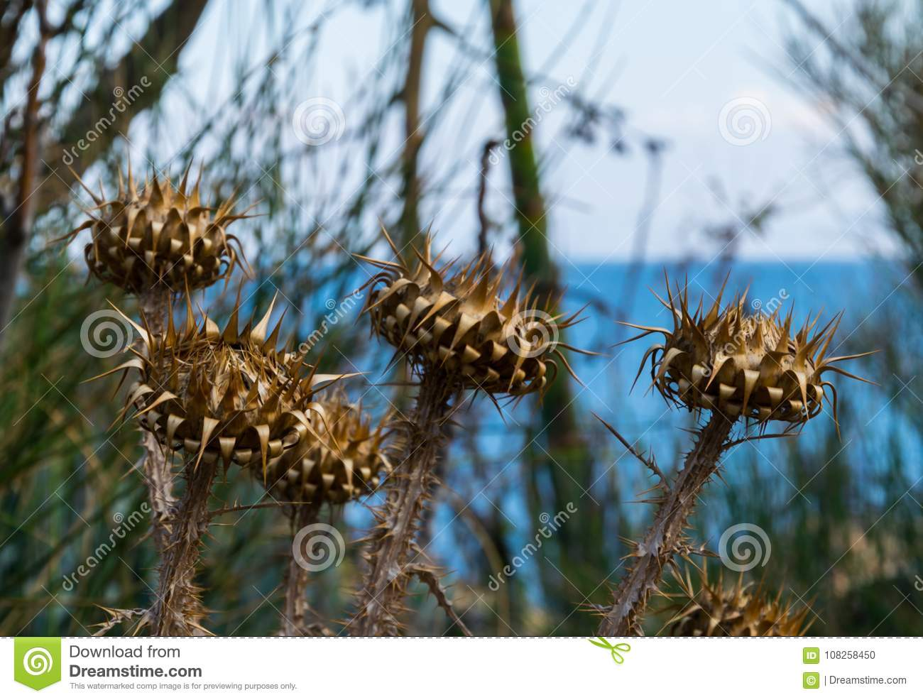 A few mediterranean withered plants